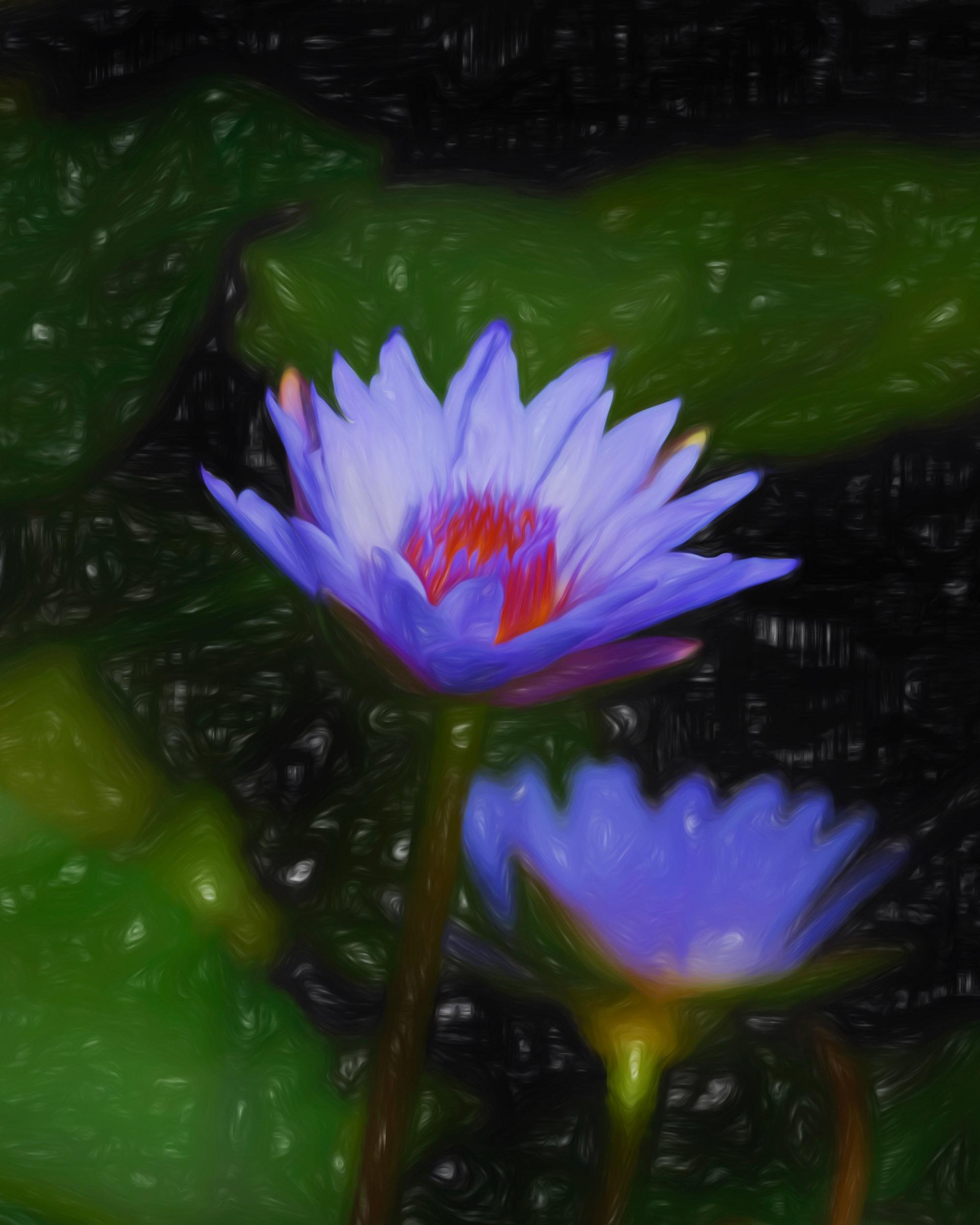 """Campfire Lily Portrait"" - Photography Artist Kevin Sibbitt"