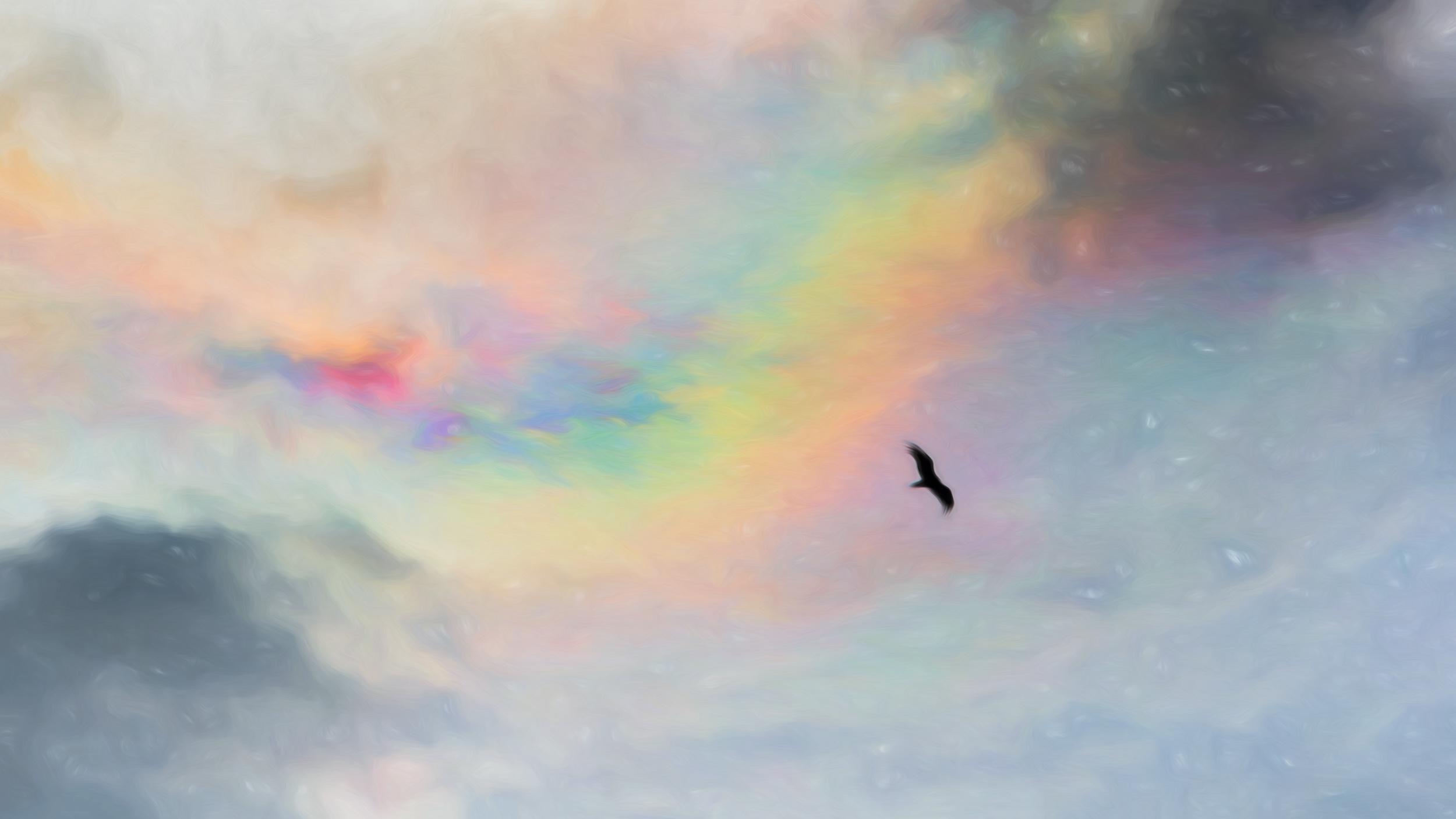 """""""Envy of Flight"""" - Photography Artist Kevin Sibbitt"""
