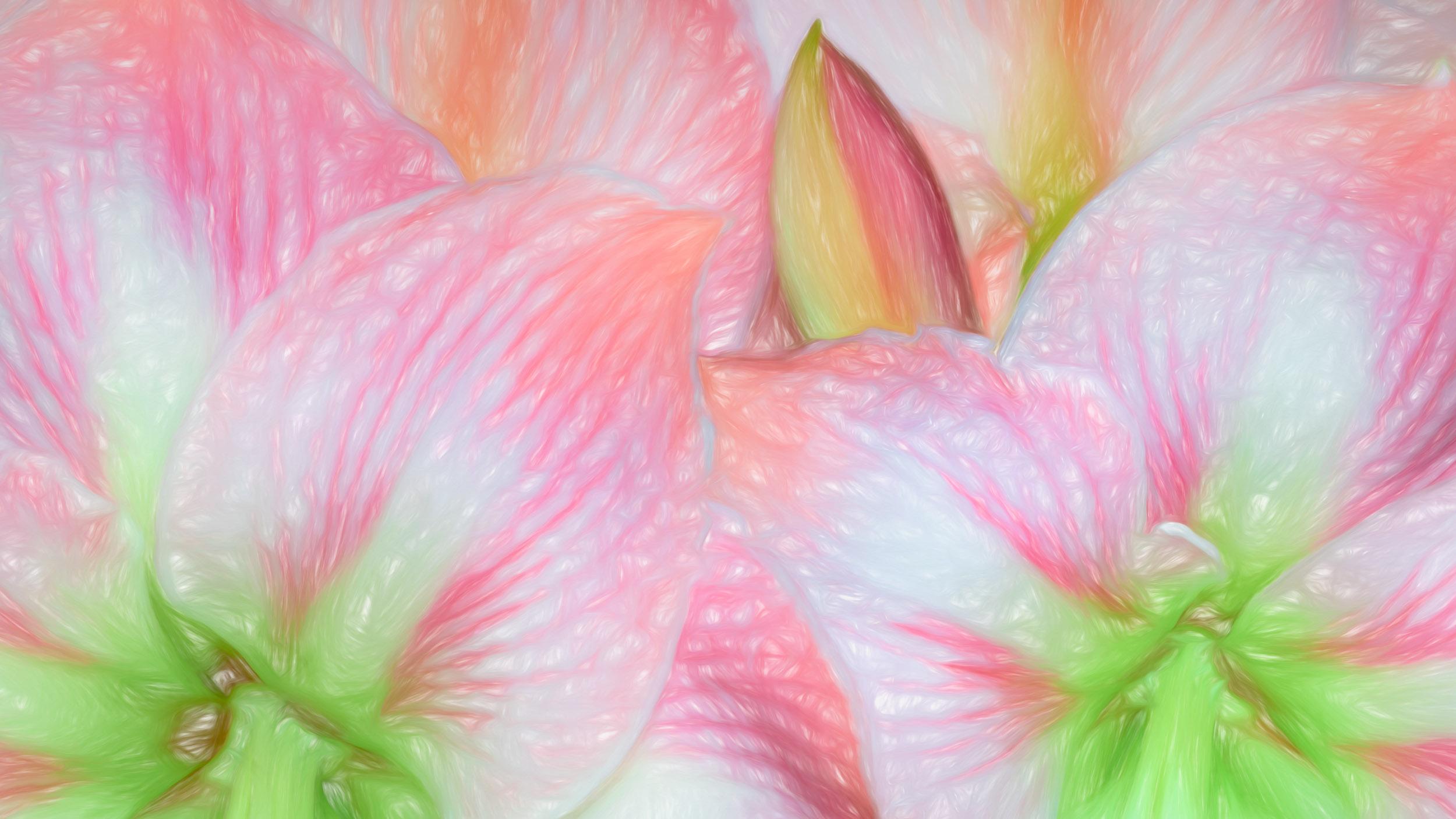 """Apple Blossom Amaryllis"" - Photography Artist Kevin Sibbitt"
