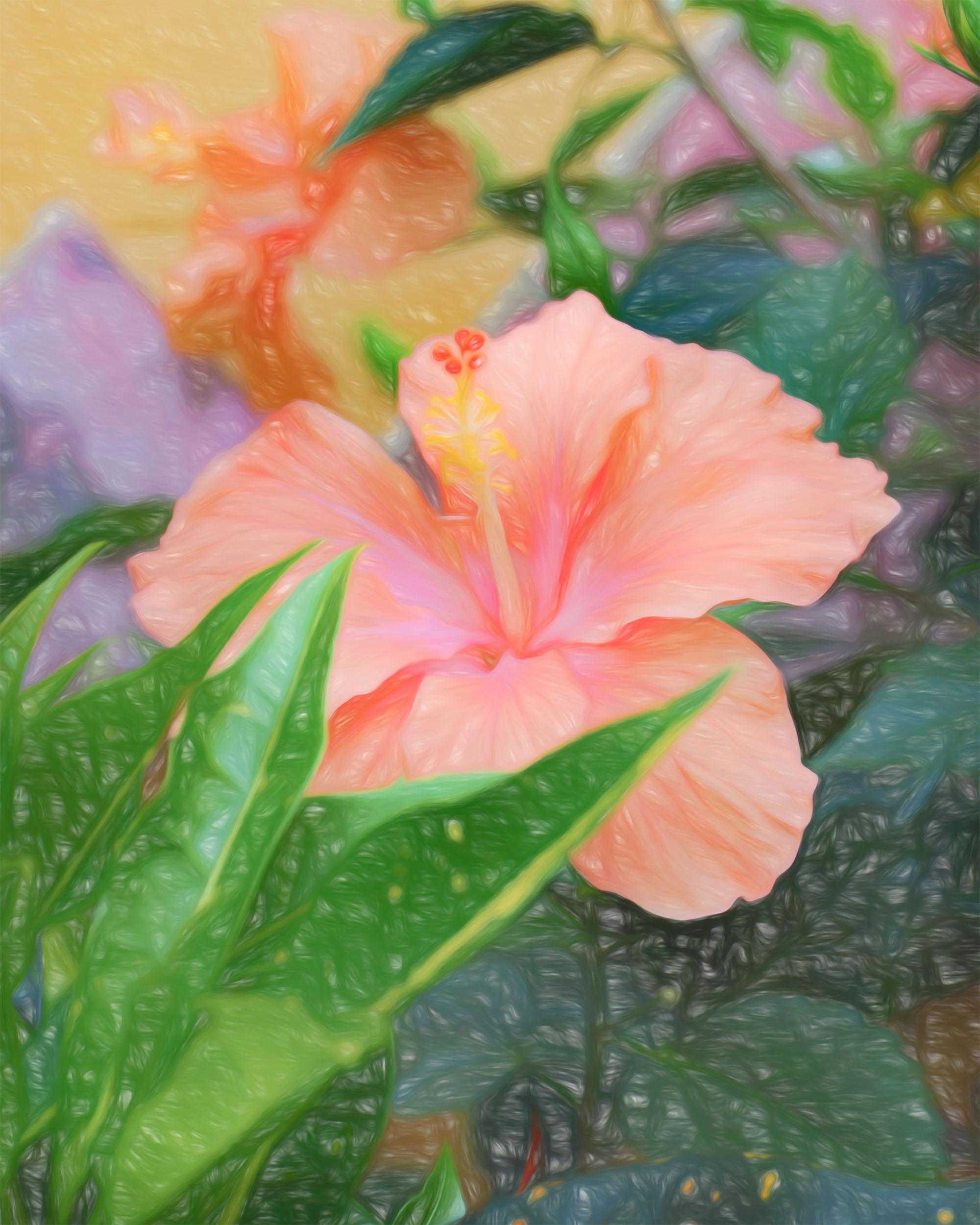 """Peach Hibiscus Portrait"" - Photography Artist Kevin Sibbitt"