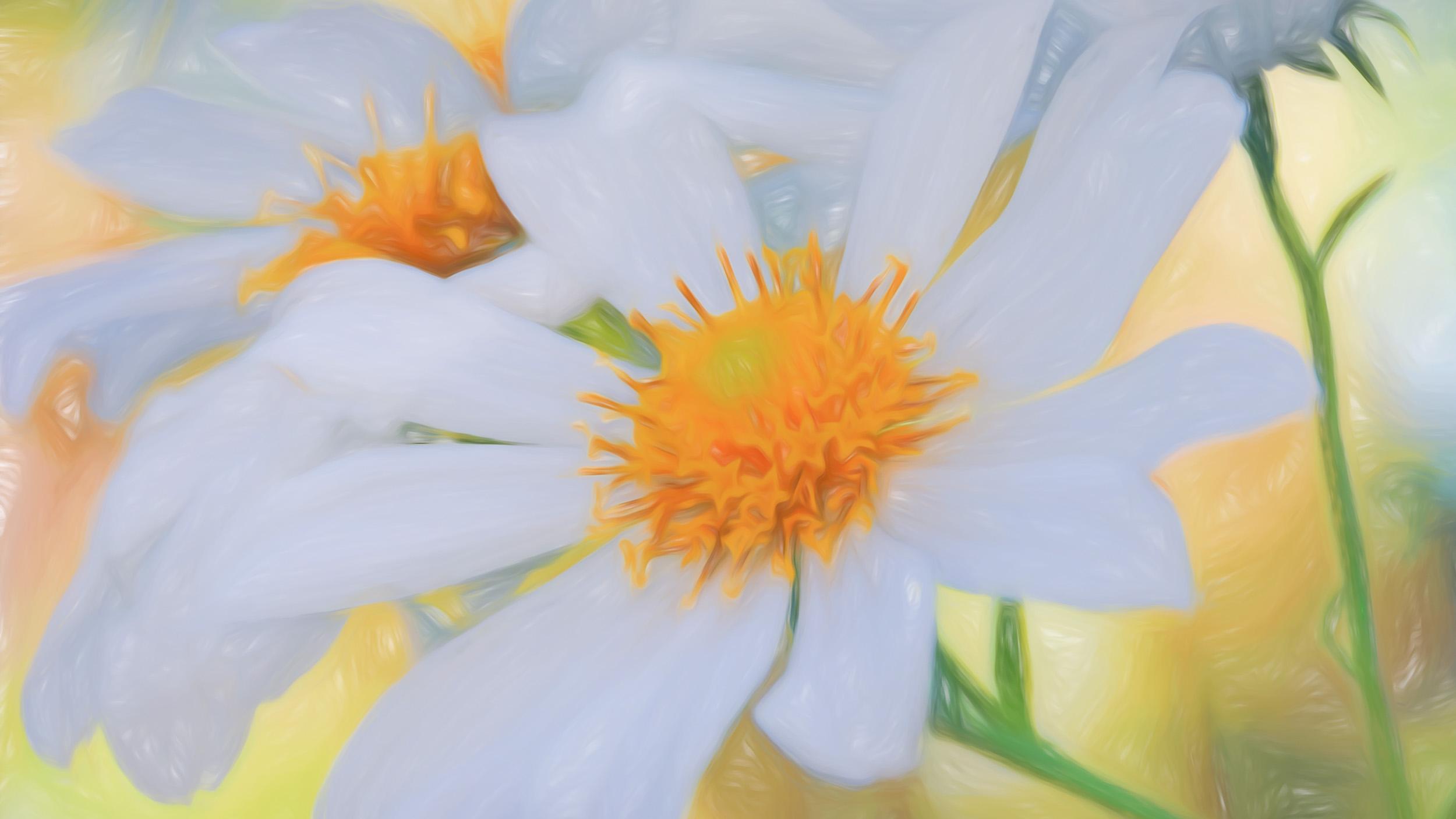 """Garden Daisy"" - Photography Artist Kevin Sibbitt"