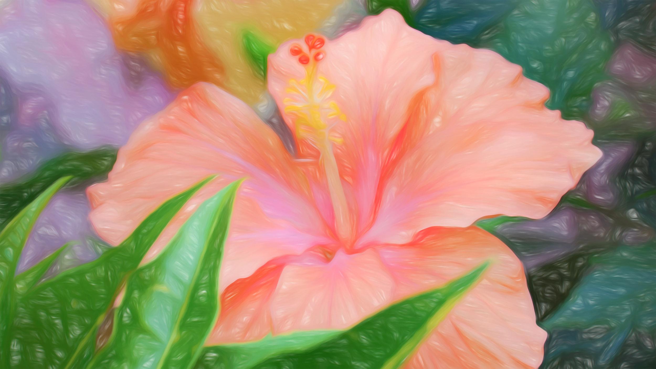 """Peach Hibiscus"" - Photography Artist Kevin Sibbitt"
