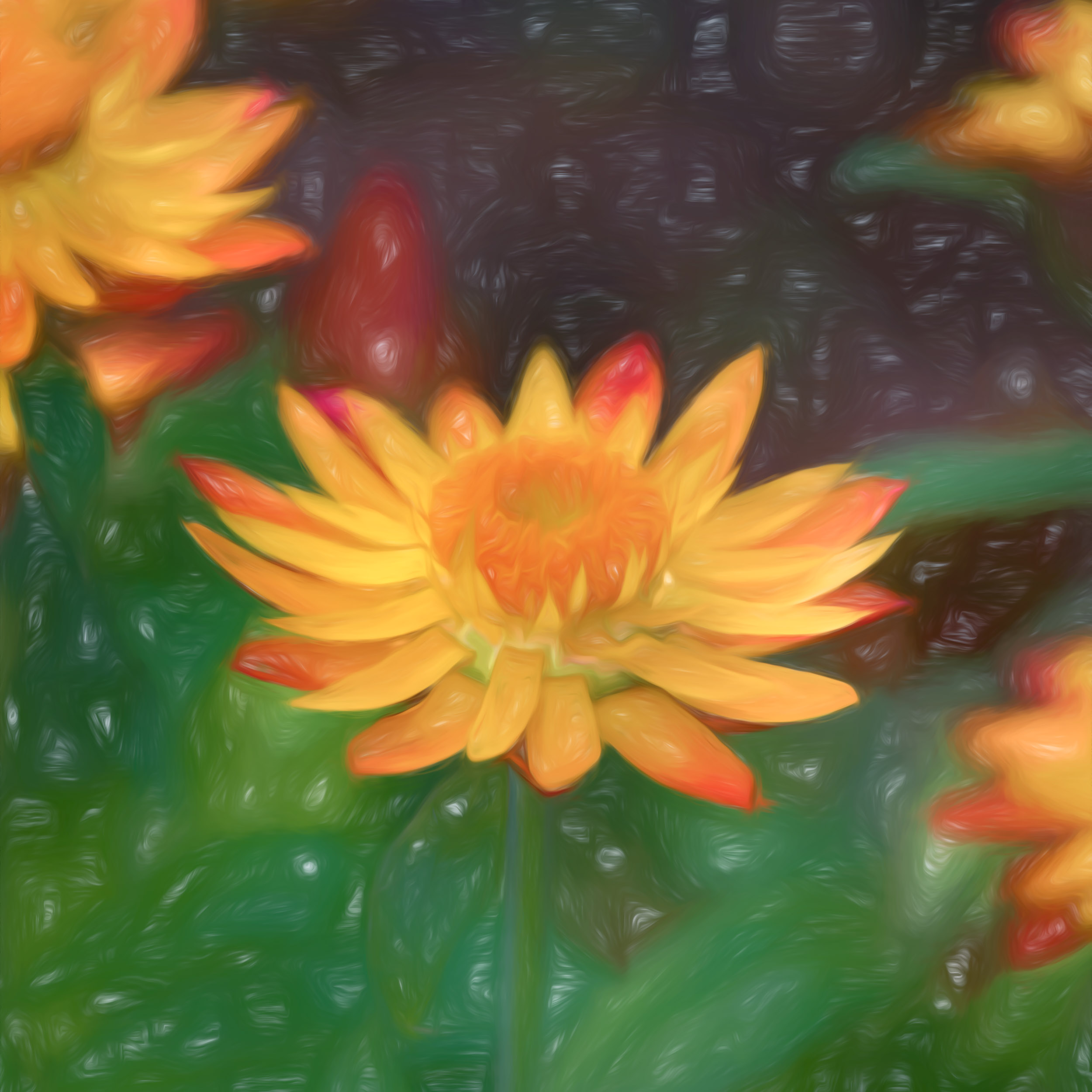 """Strawflower Squared"" - Photography Artist Kevin Sibbitt"