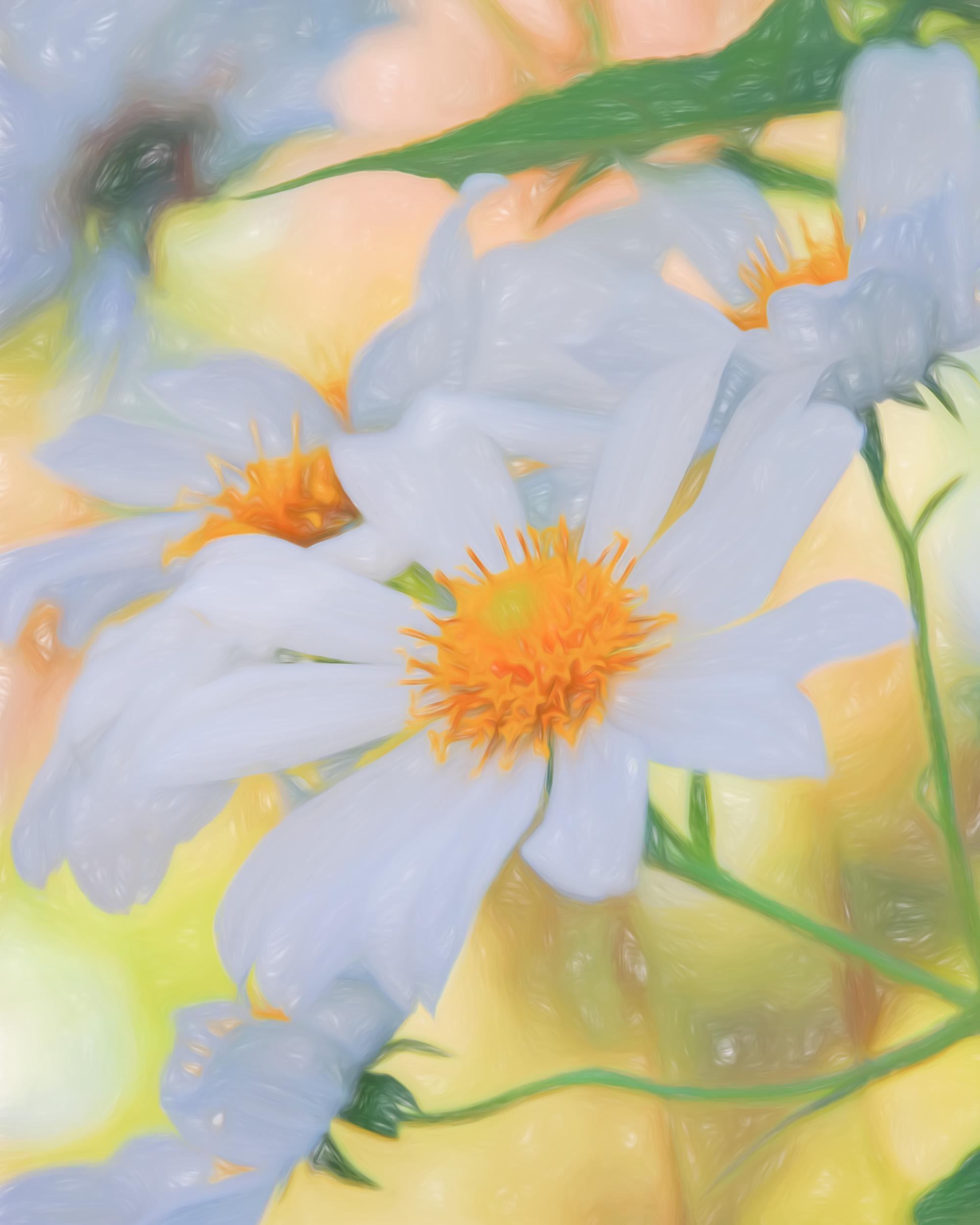"""Garden Daisy Portrait"" - Photography Artist Kevin Sibbitt"