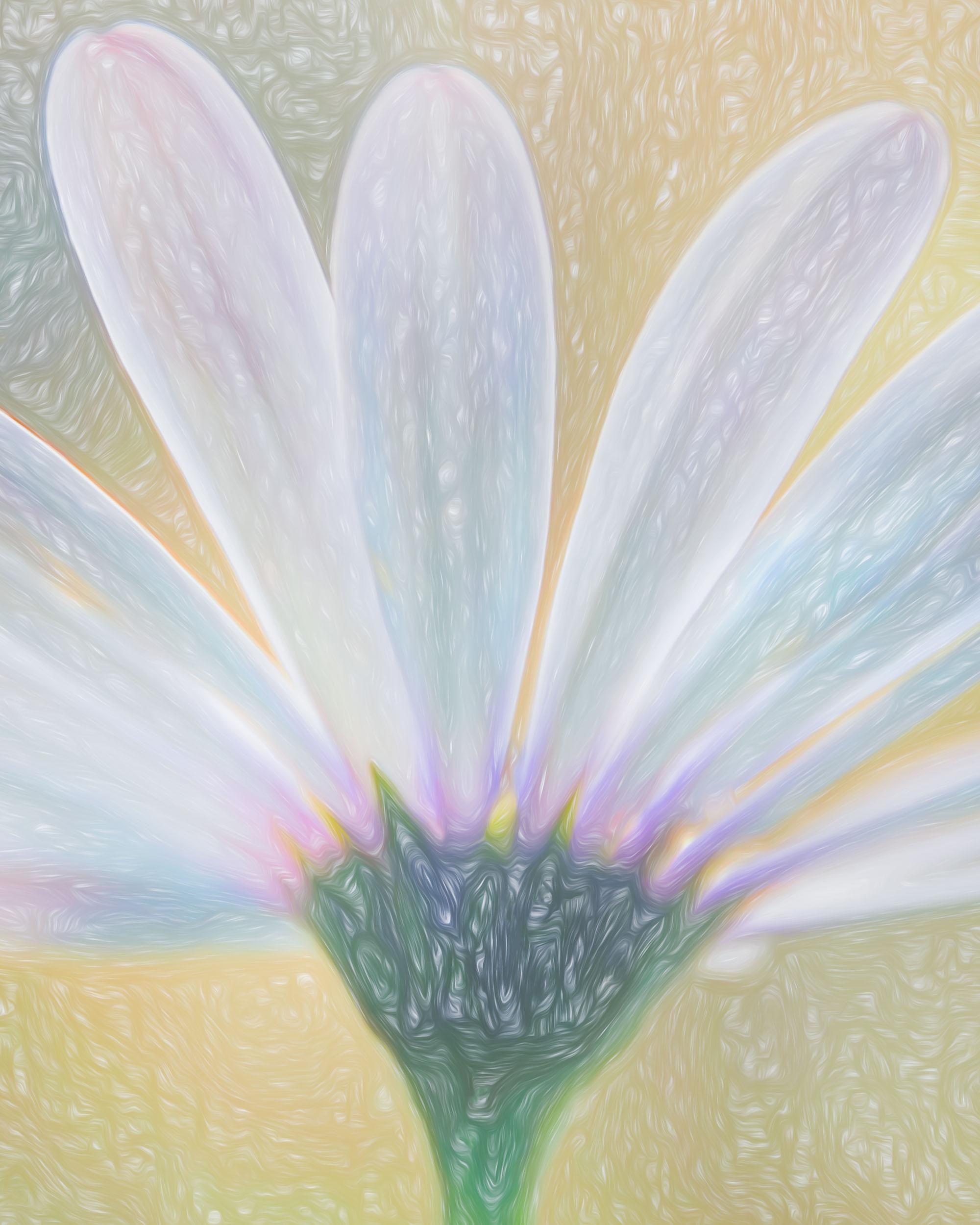 """Light Energy Portrait"" - Photography Artist Kevin Sibbitt"