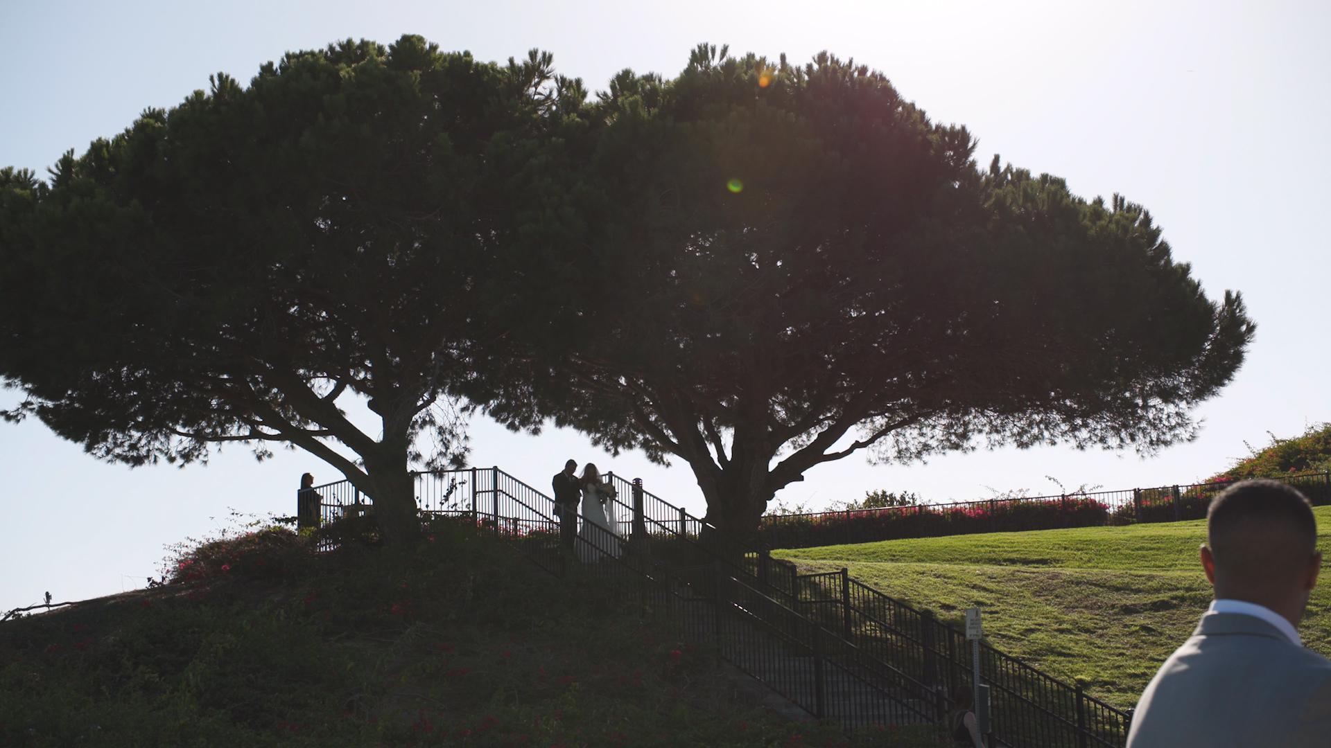 Bride by the Tree0.jpg