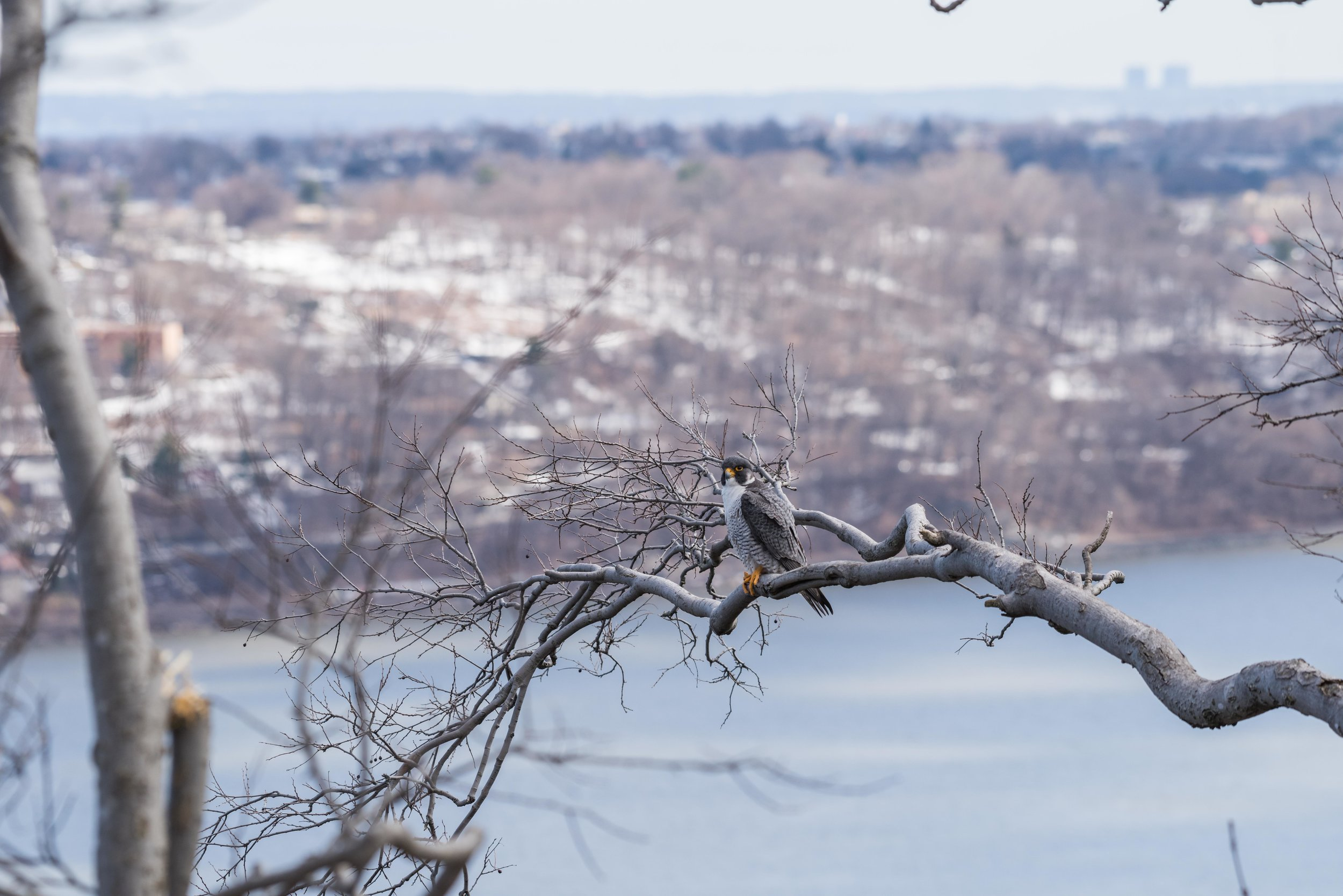 Photo taken on a full frame camera at 200mm.