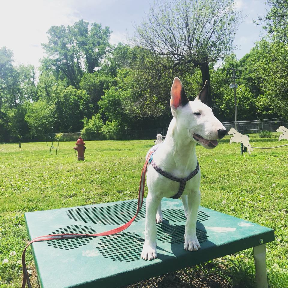 Dempsey Dog Park - 607 Ely St.Hannibal, MO 63401
