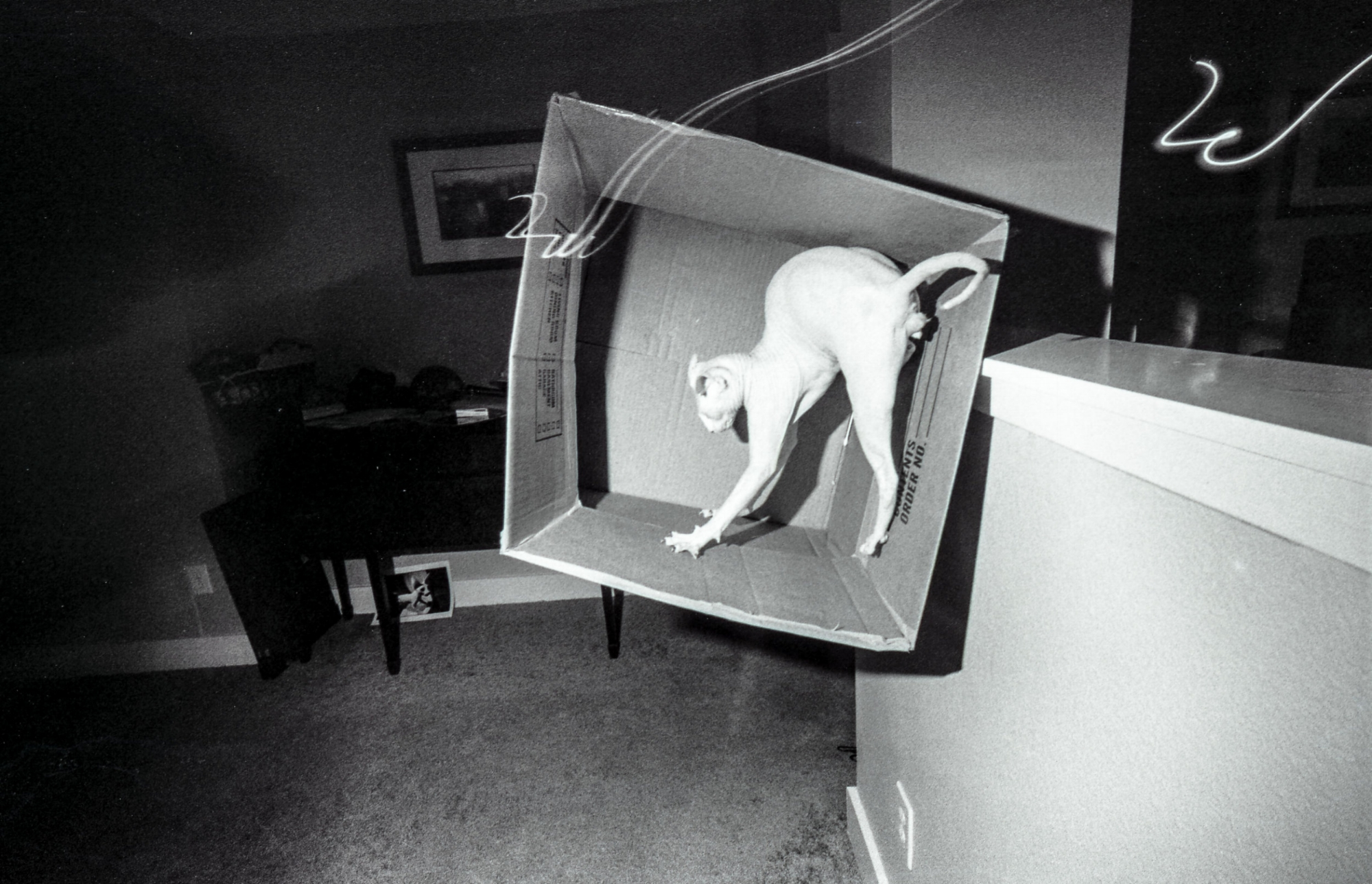 Photo by Clifton Barker. A hairless cat is in a moving box which is falling off a half-wall. A desk is in the background.