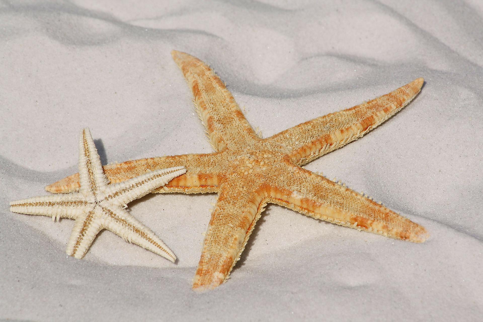 starfish-343791_1920.jpg