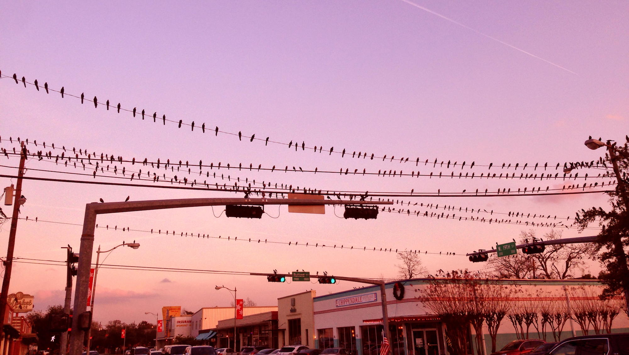 houston-birds-wire-sunset.jpg