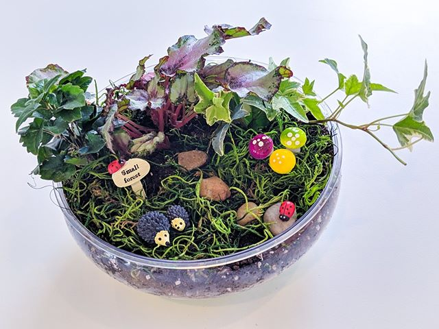 Sneak preview of our Fairy Garden STEM class tomorrow! There's still time to register! Reserve your spot at https://tigerlilystem.com/stem-classes/2019/4/27/diy-fairy-garden-grades-k-5