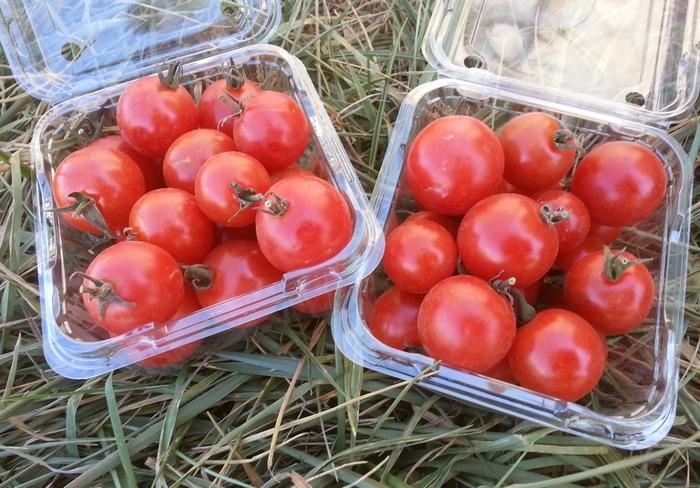 Photo: Angelica Organic Farm