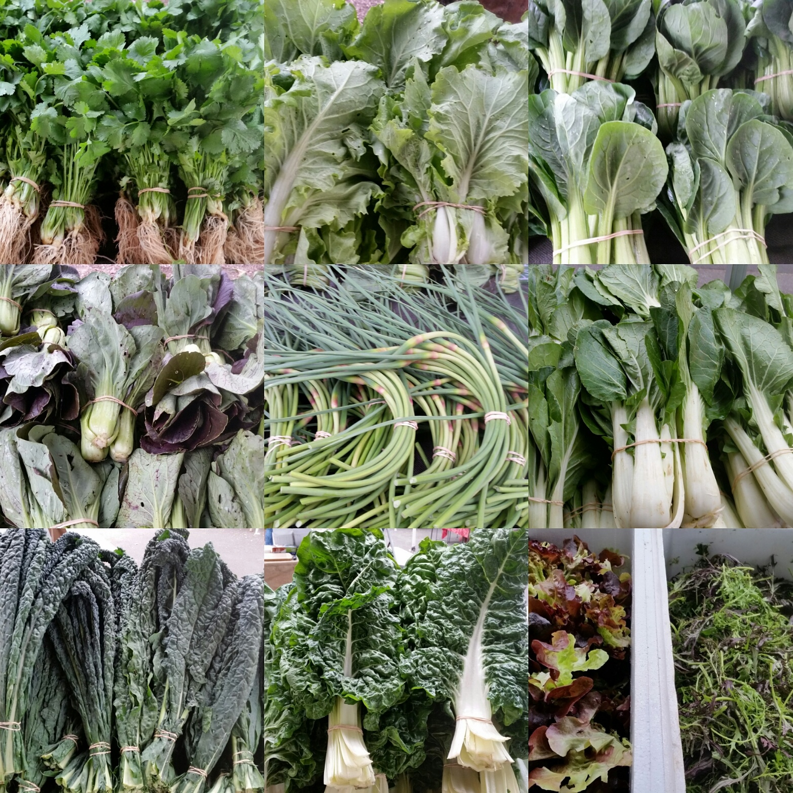 Our garlic scapes and some of our herbs and leafy greens