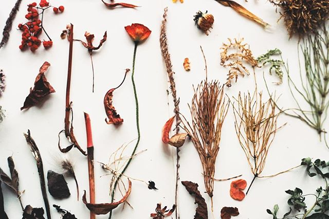 the inspiration for my prints ~ icelandic wildflowers drying on my sketchbook ~ shot on #35mmfilm
