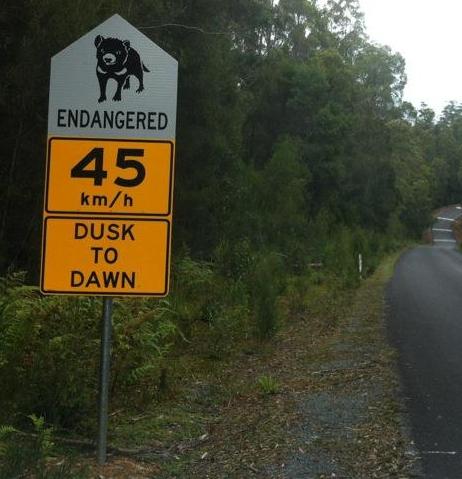 A highway sign aimed at reducing Tasmanian devil road kill.