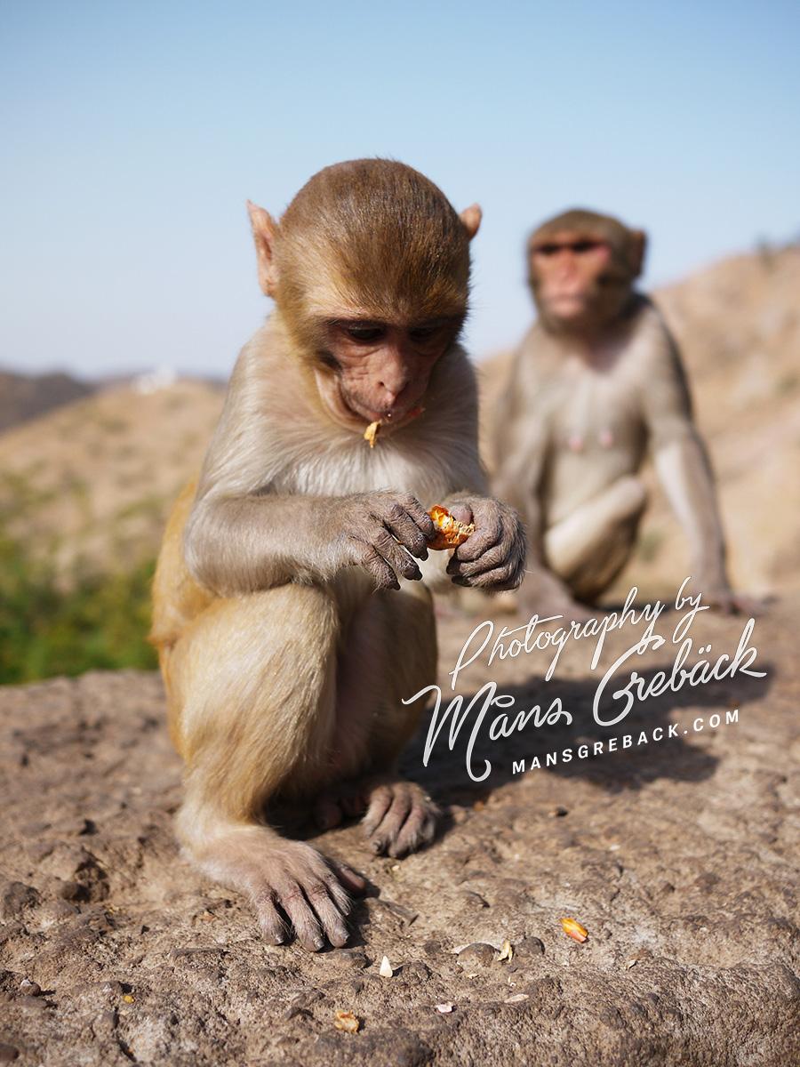 Monkey Open Peanut