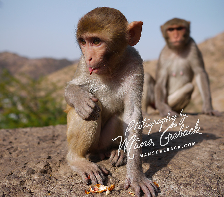 Monkey Closeup
