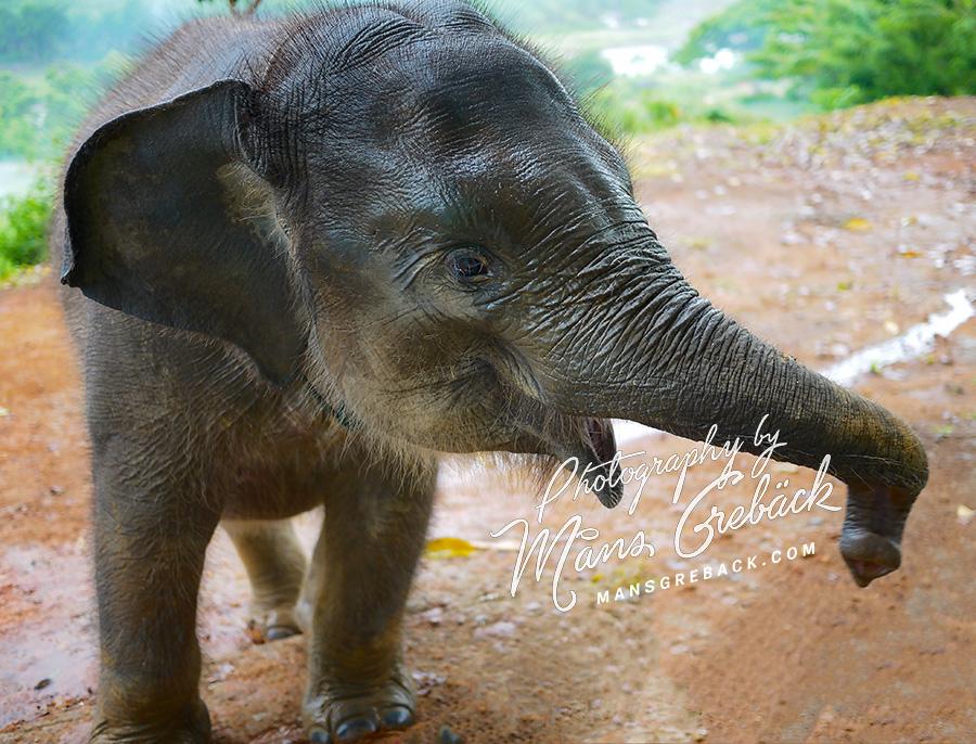 Baby Elephant Closeup