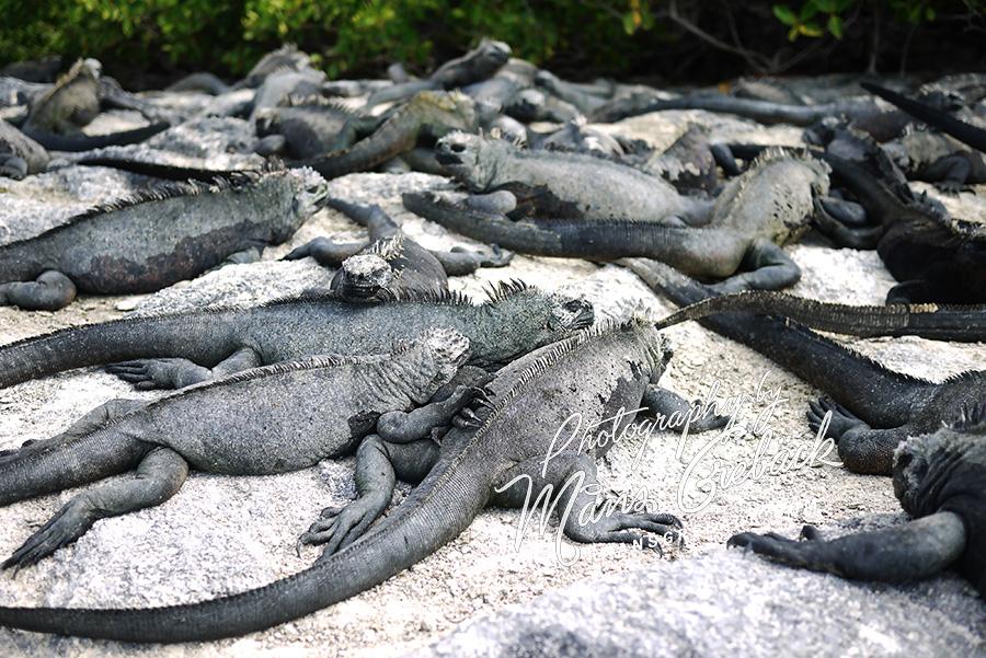 Beach Lizards