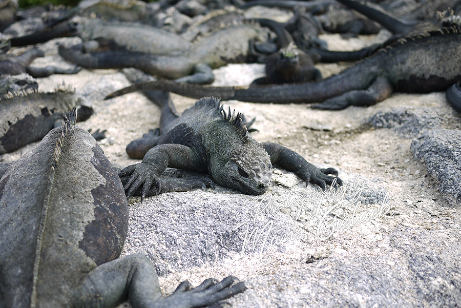 Lizard Sleep