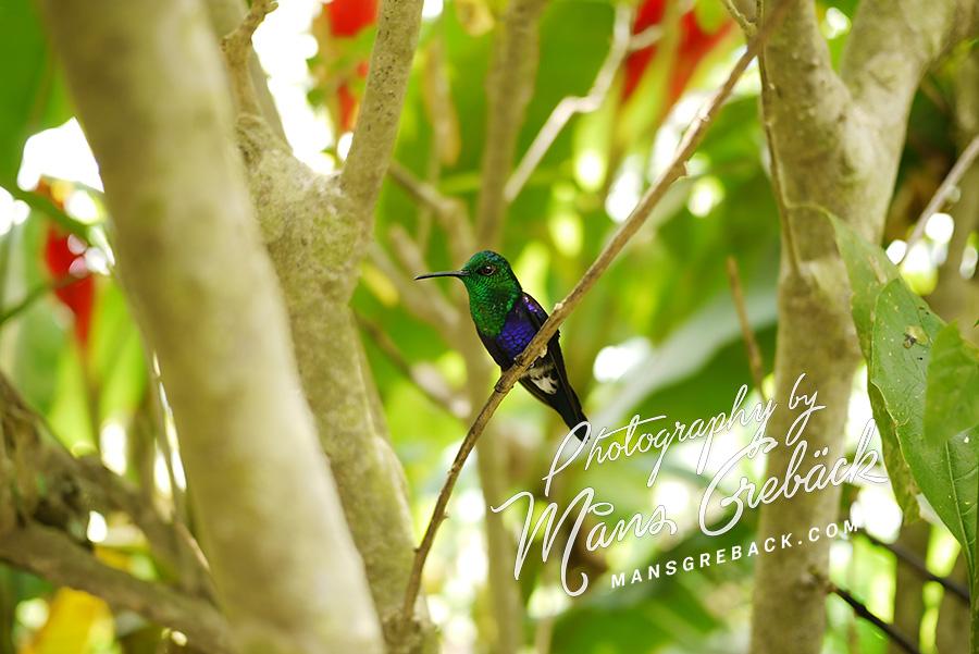 Hummingbird Sideview