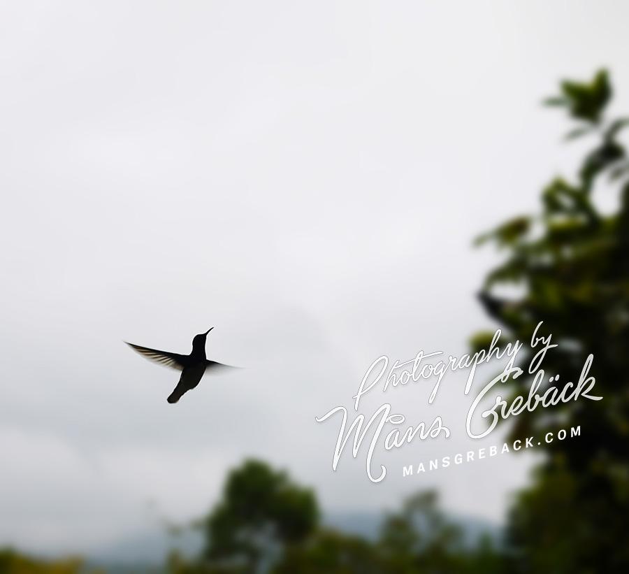 Hummingbird Fly