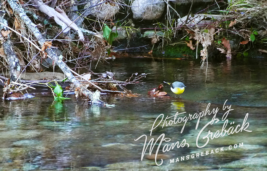 Wagtail Water