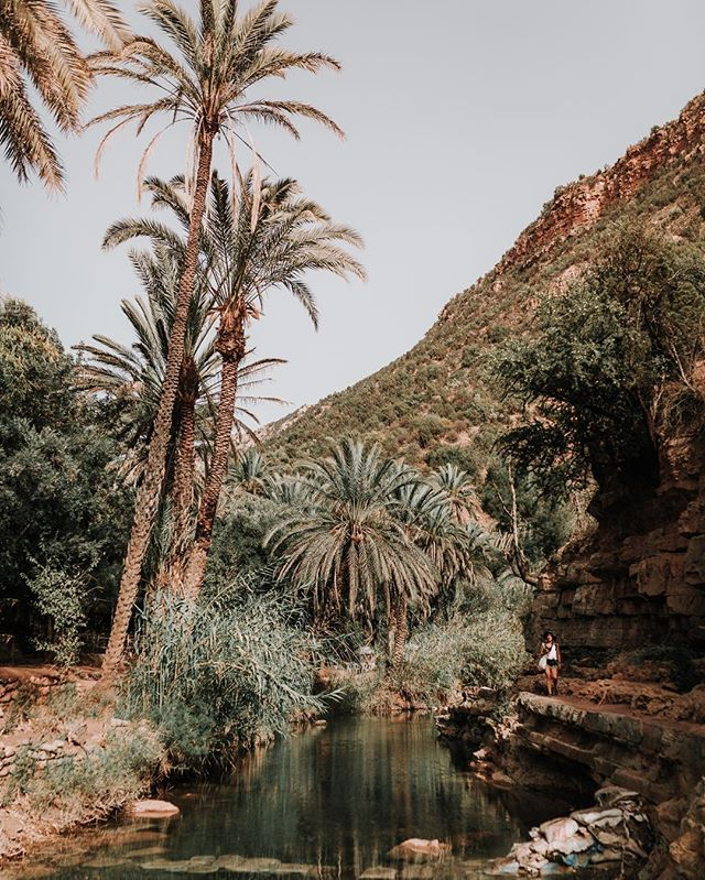 Just one on many incredibile places in Morocco. Please take me back there!! Ps these are dates palms, and their fruit are sooo tasty!! 🤤🤤