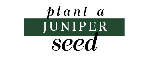 PlantSeedHeader.jpg
