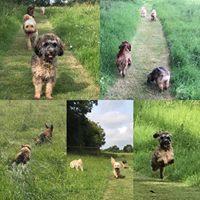 Dog day care - fun in the paddocks
