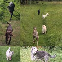 Dog day care and home boarding, off lead walks