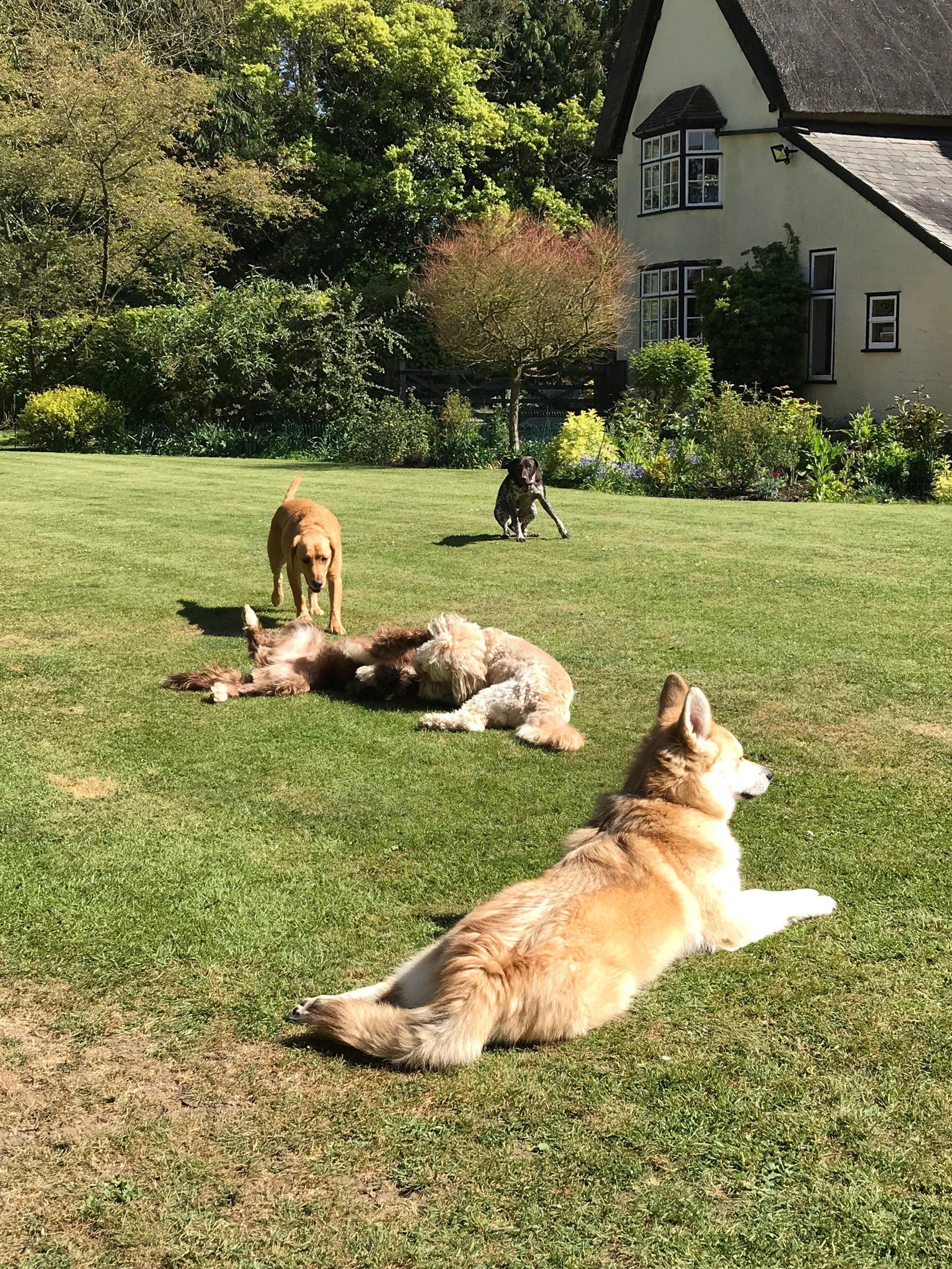 Lazing around in the garden