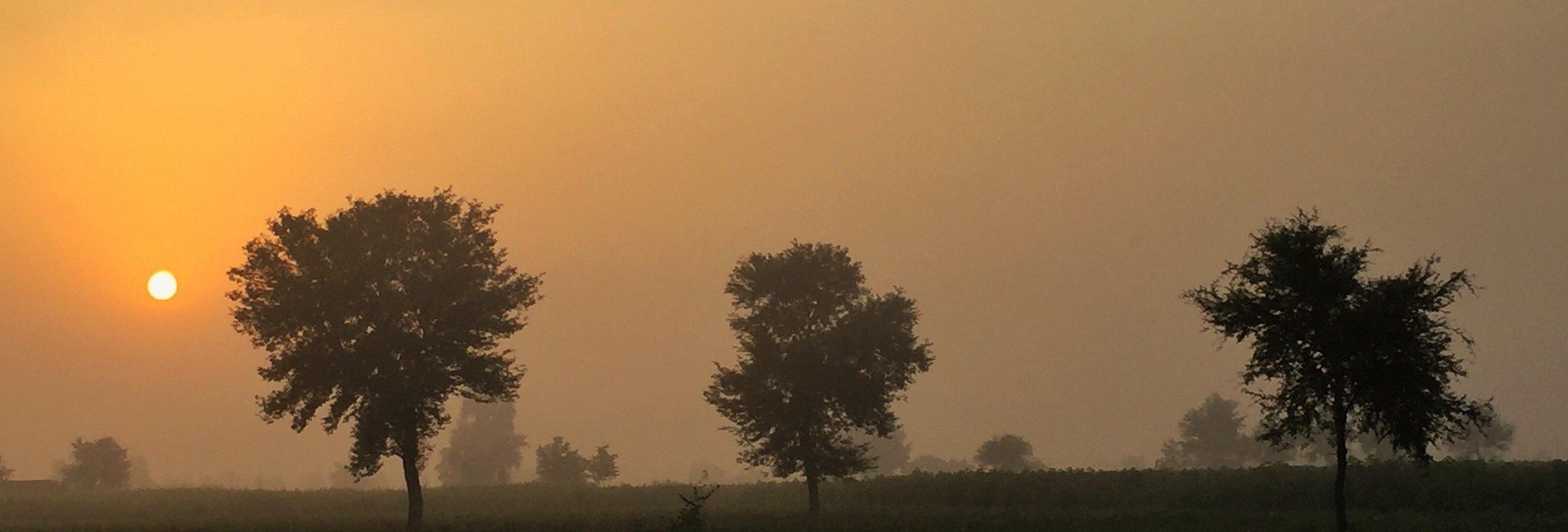 Sunrise over Krishan Rao's Sheesham trees