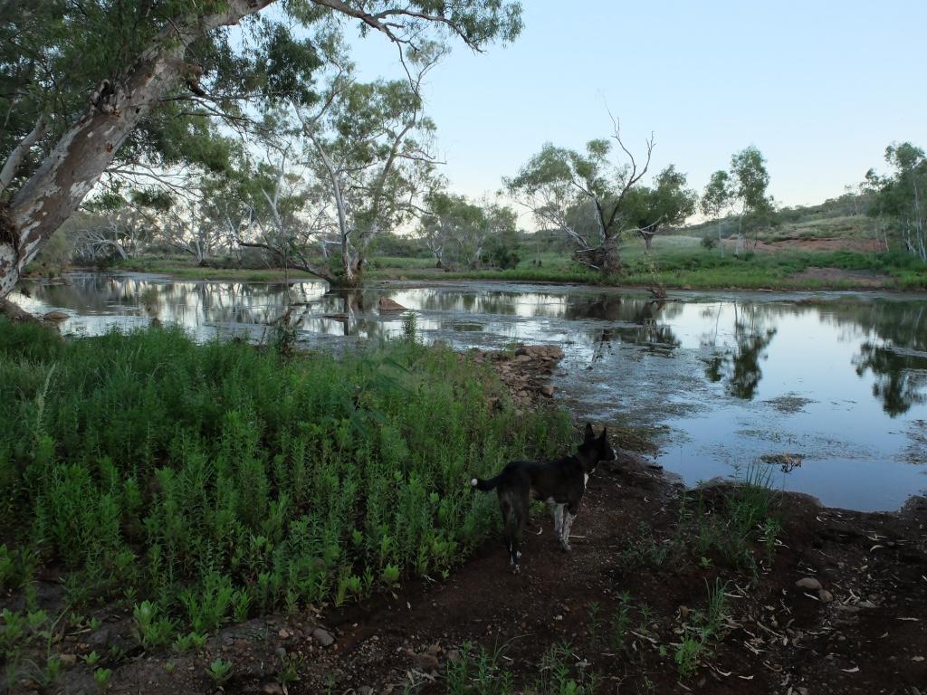 Sarah Mortimer Wetland scene.jpeg