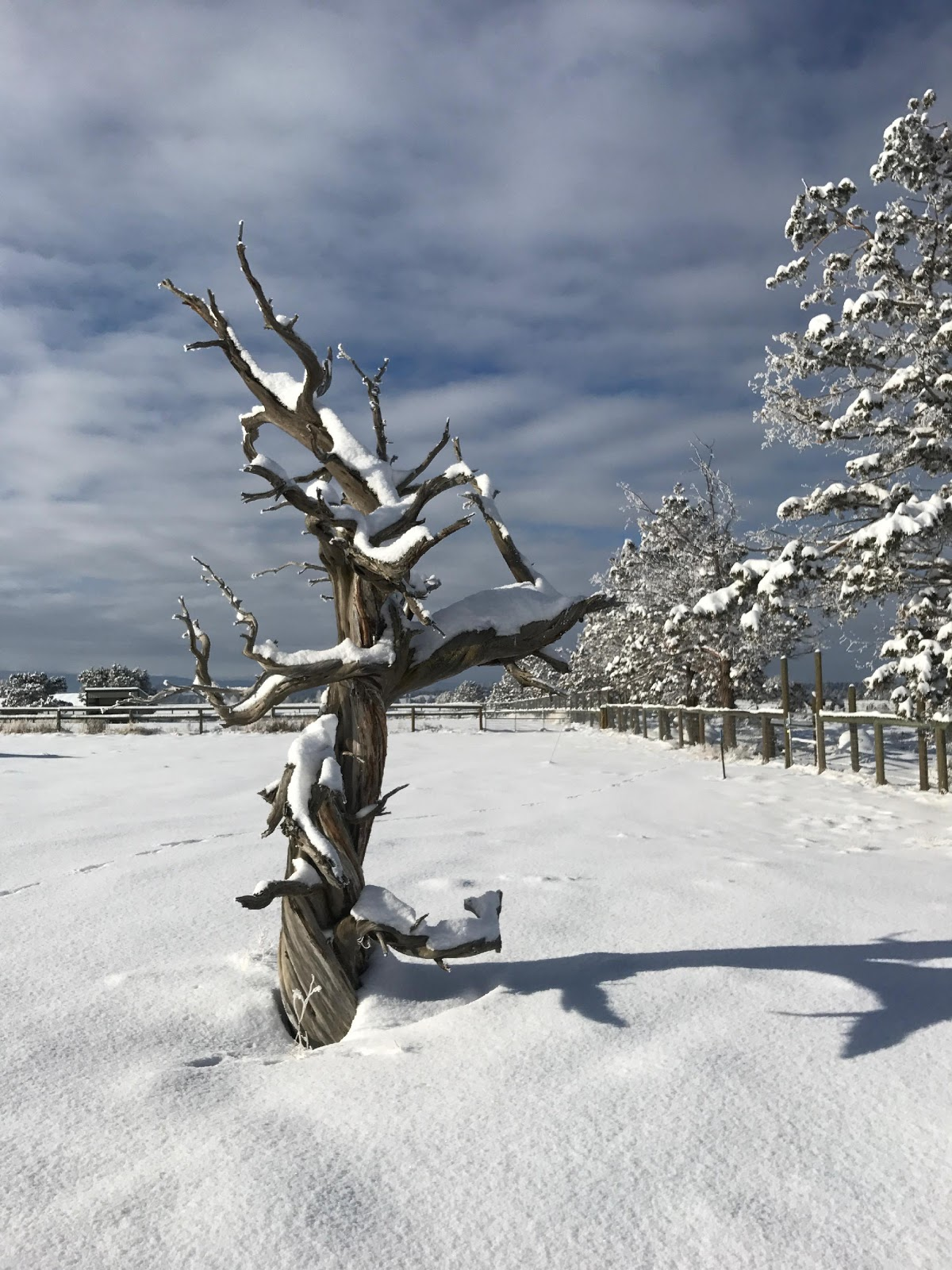 Ralph Nauman tree pic.jpg