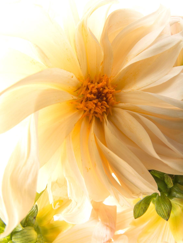 still_life_flower_photographer