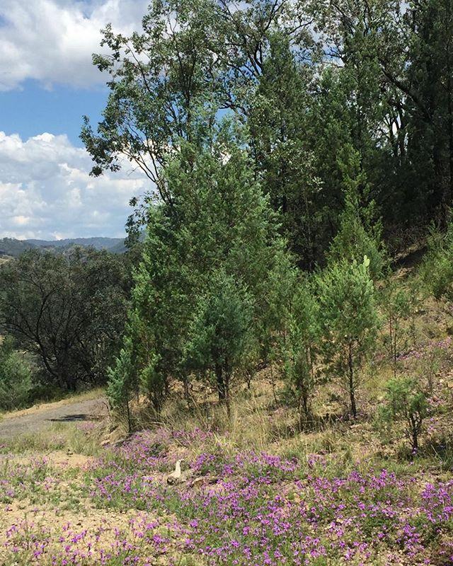 Gone bush 💚 #kindercalmer #bush #regionalnsw #breathe #timeout #lovethecountry