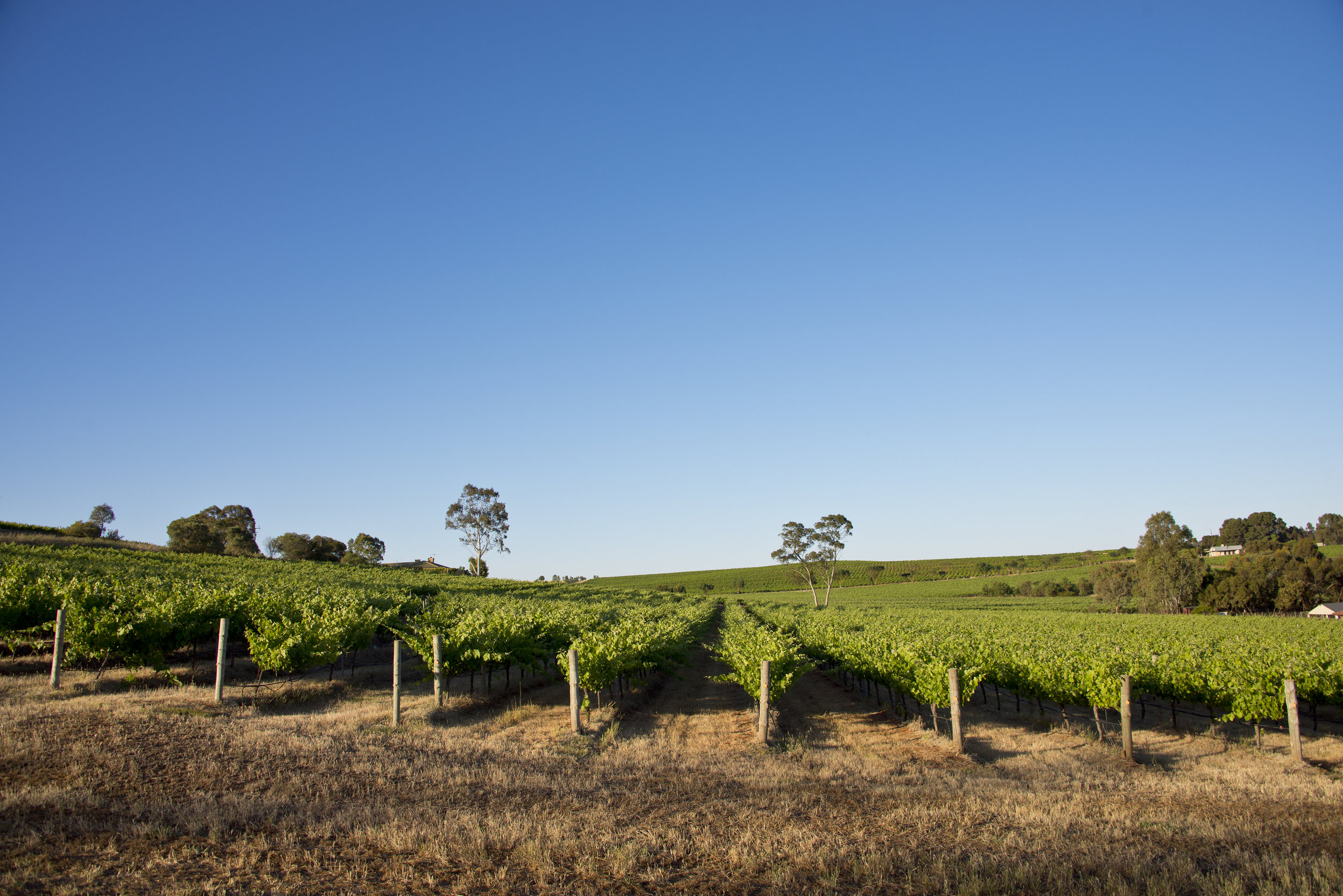 Eden Valley, South Australia -