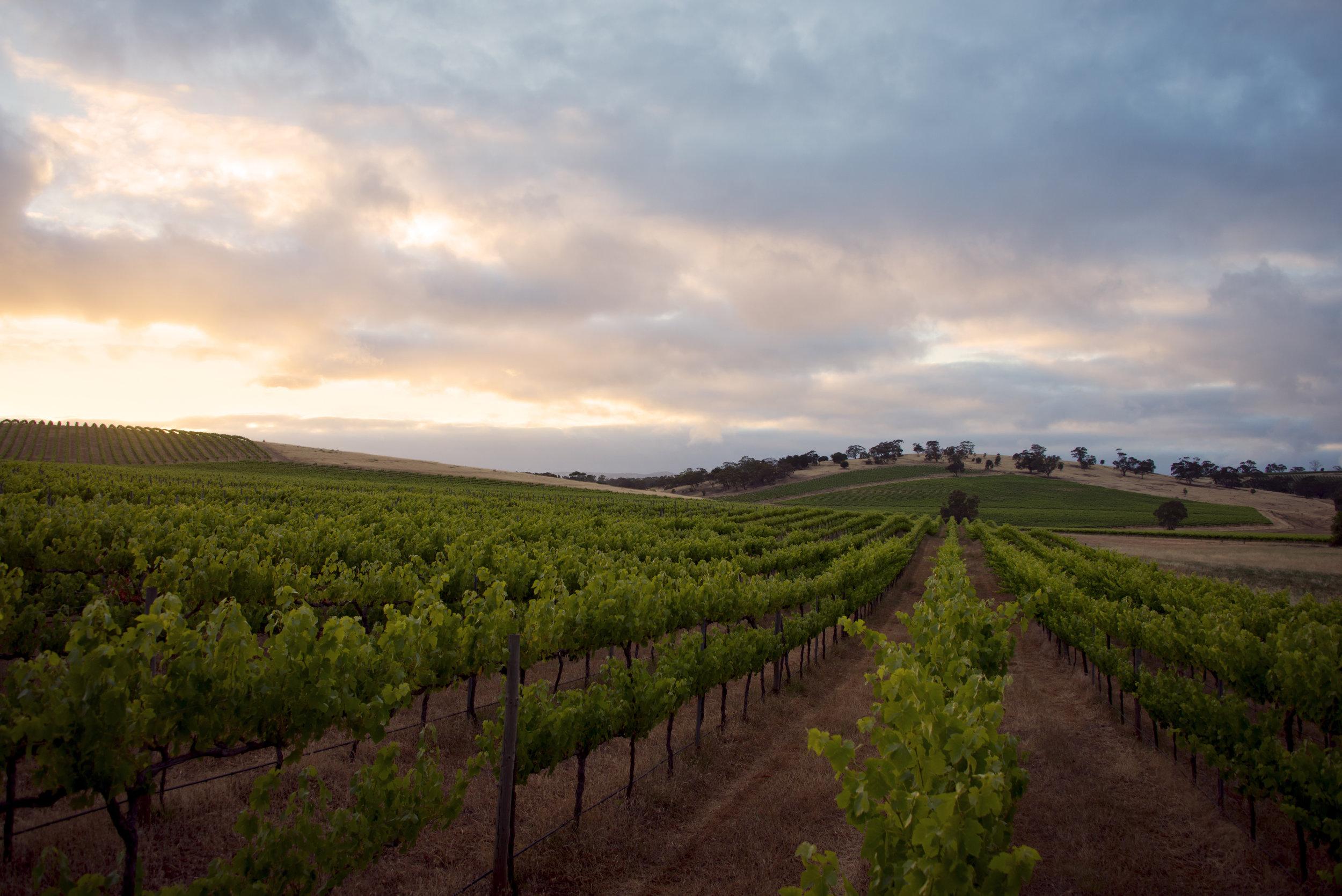 Barossa Valley, South Australia -