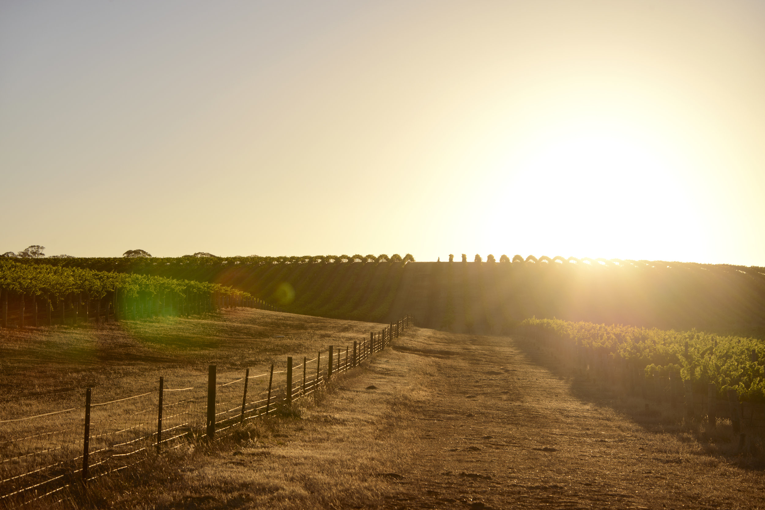 Clare Valley, South Australia -