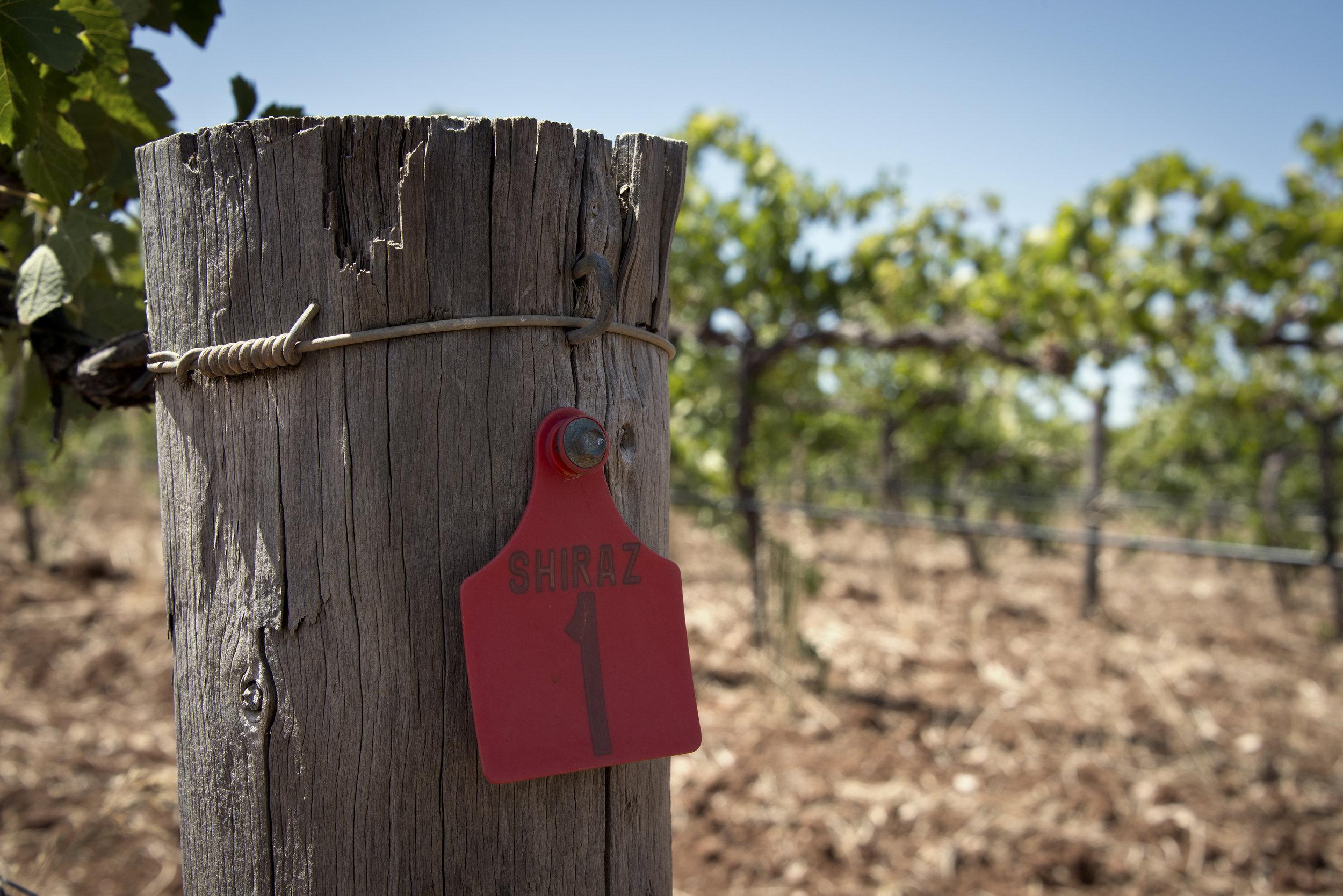 Winemaking -
