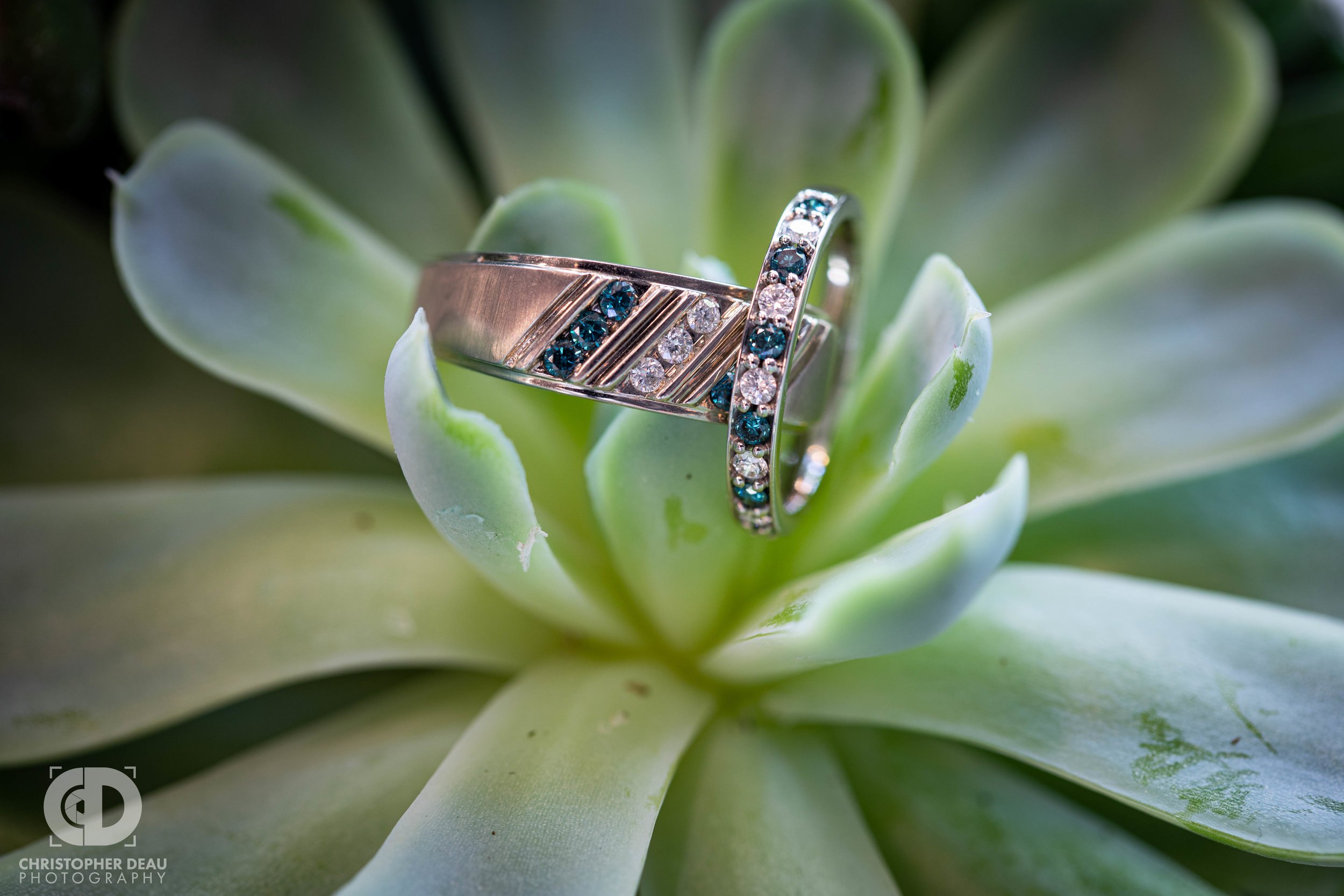 close up wedding ring on succulent