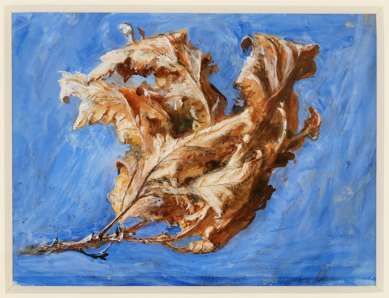 Study of Spray of Dead Oak Leaves 1879, John Ruskin, c Collection of the Guild of St George / Museums Sheffield