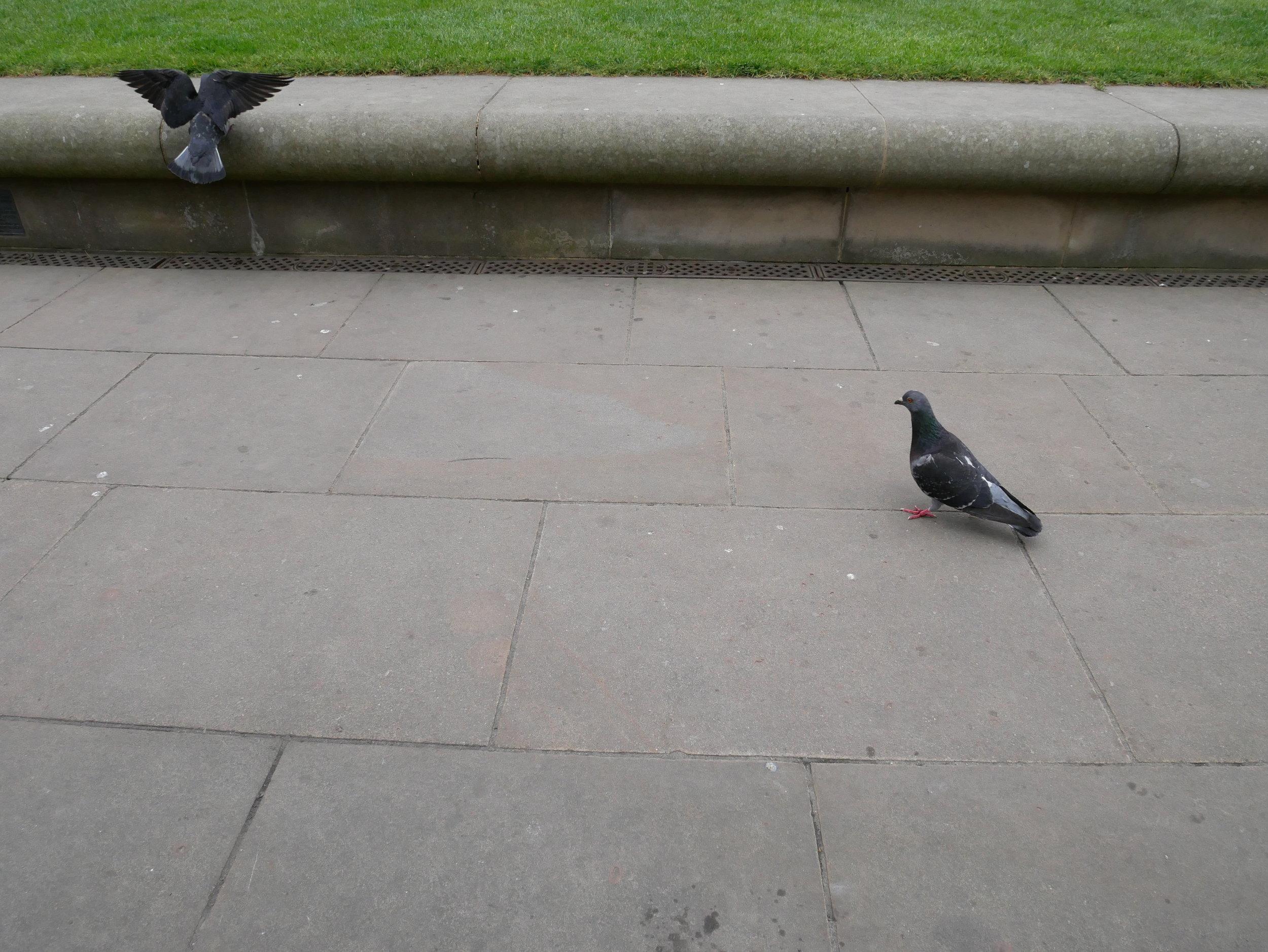Efter besöket i kyrkan strosade jag omkring en stund. Jag satte mig på en bänk och glodde på fåglar, t.ex.