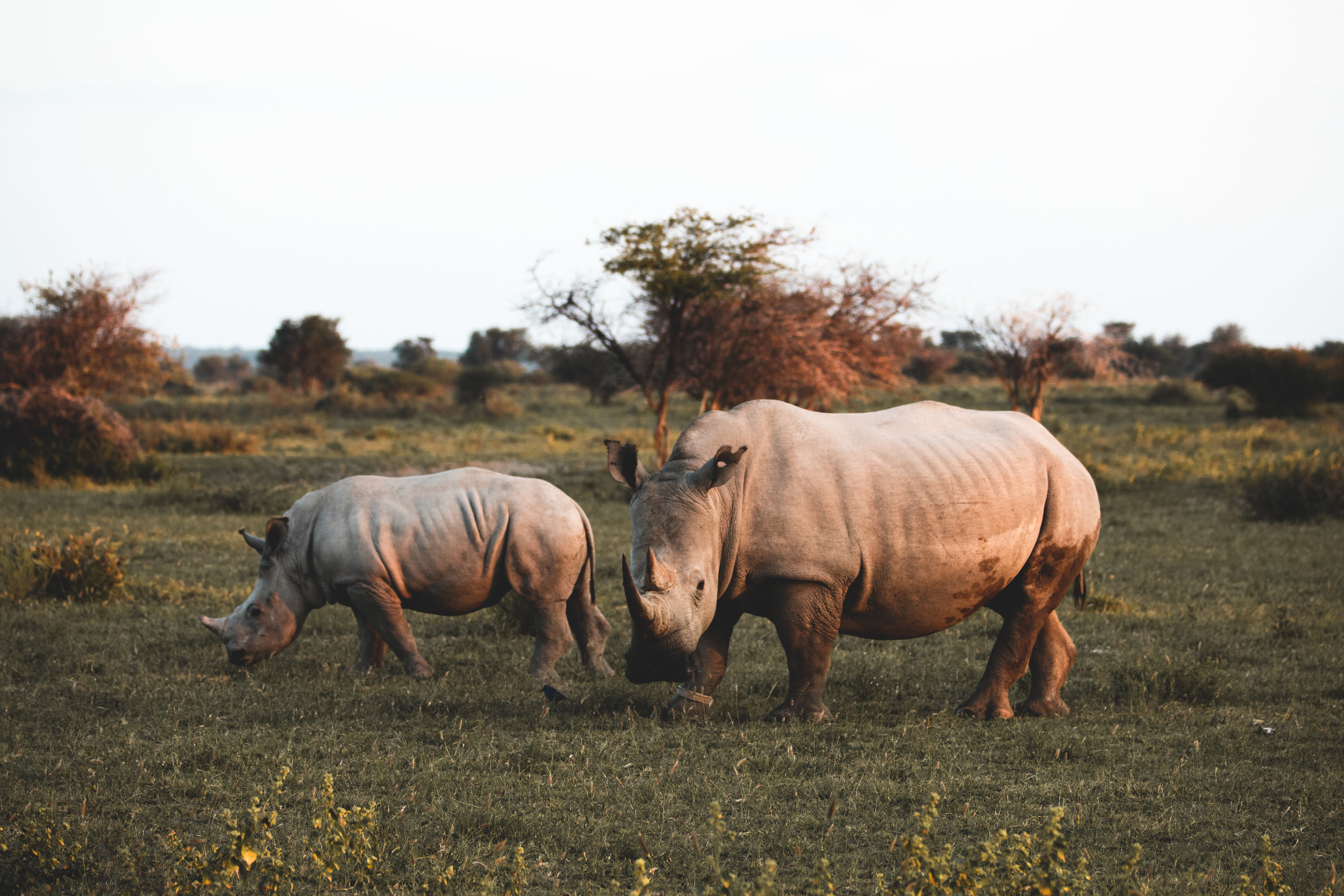 Mom and baby at Khama Rhino Sanctuary, Botswana.