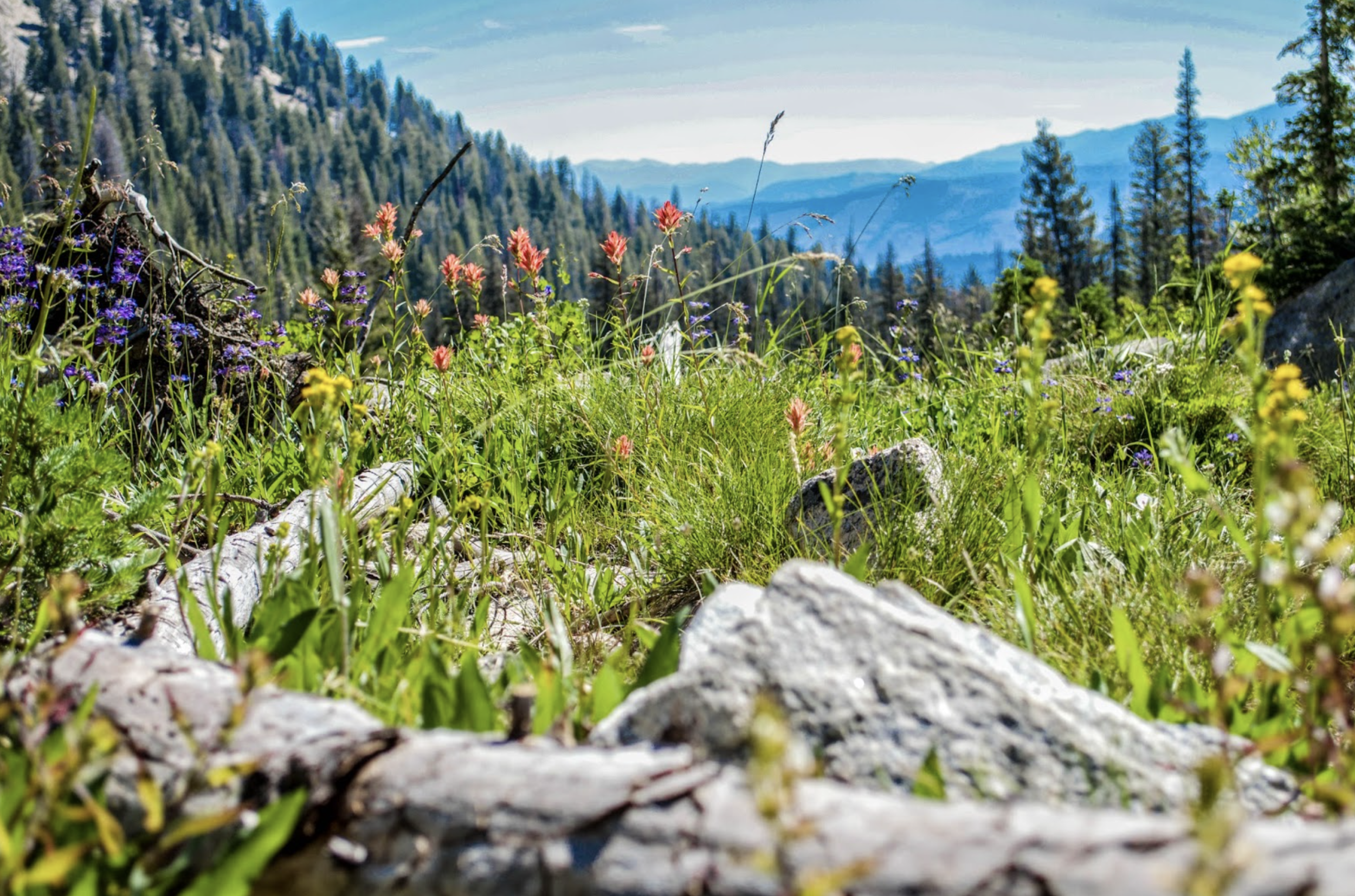 Sawtooth National Forest_3-Shaylyn-Berntson.png