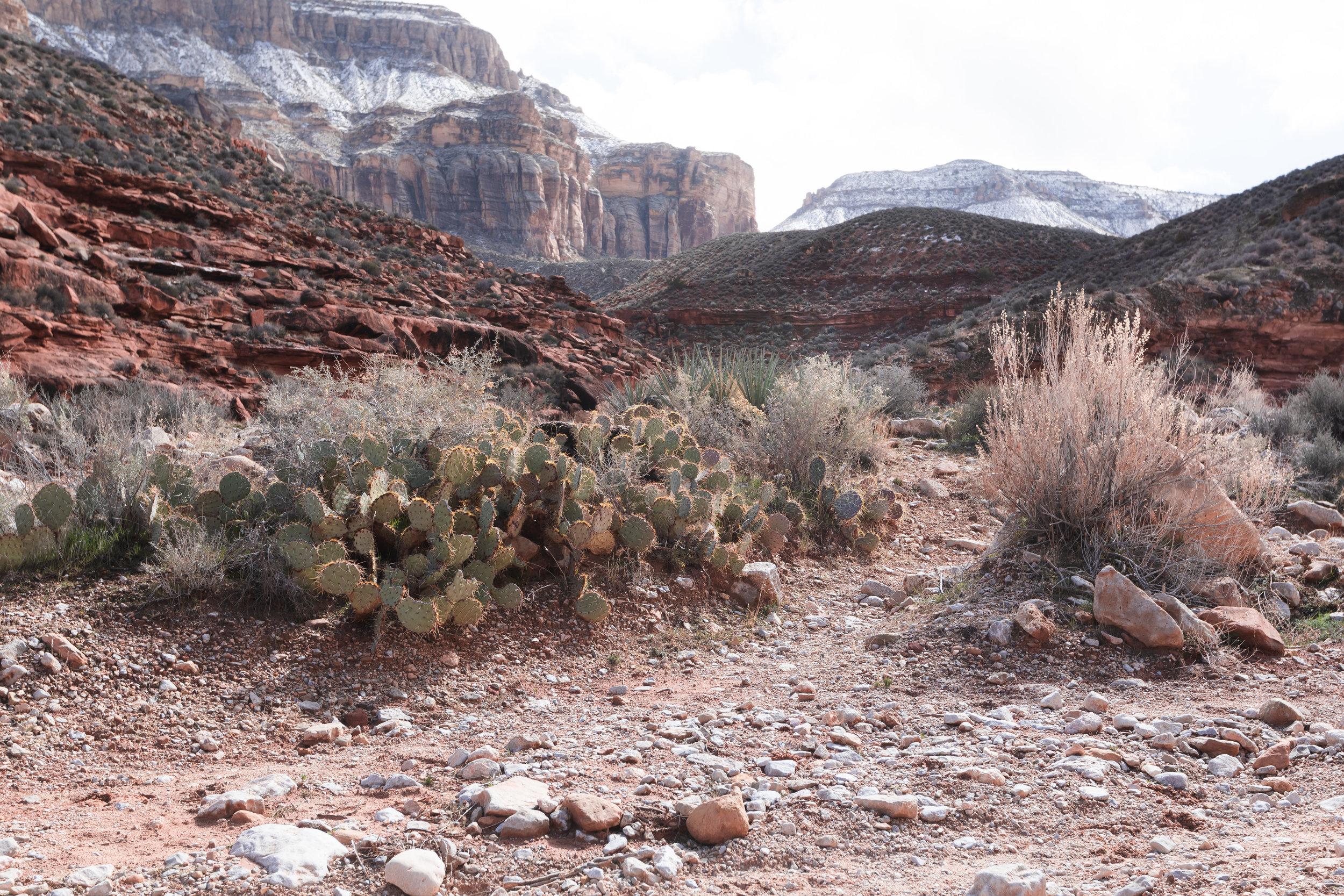 Hiking down the canyon toward the Havasupai Campground.