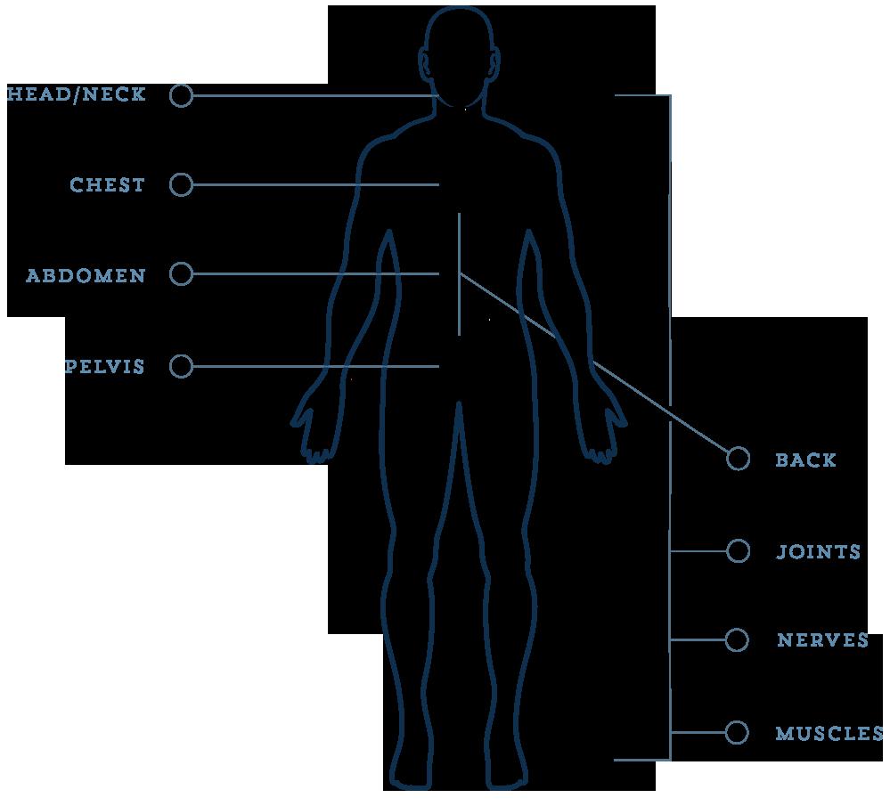 body diagram