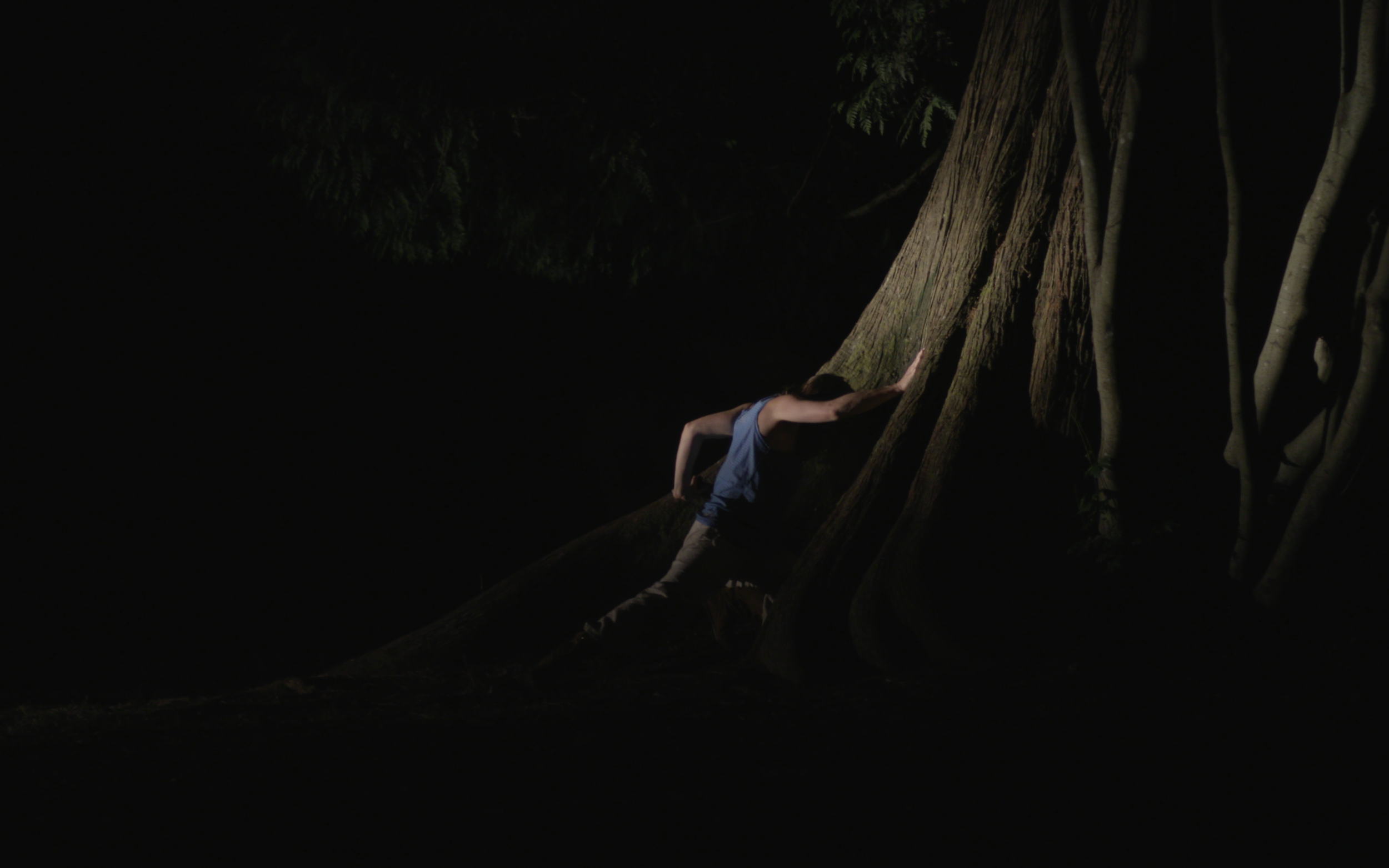 *** BecauseWeAreUsedToLiving ***  Created and performed by Olivia Shaffer, concept by Dave Biddle, cinematography by David Ehrenreich near The Hollow Tree at Stanley Park September 2017